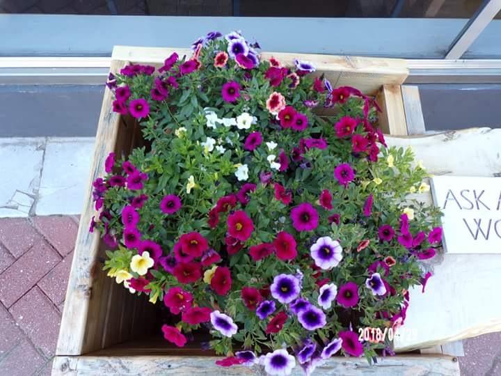 Big Pot of Flowers by bobbie.whitlock.7