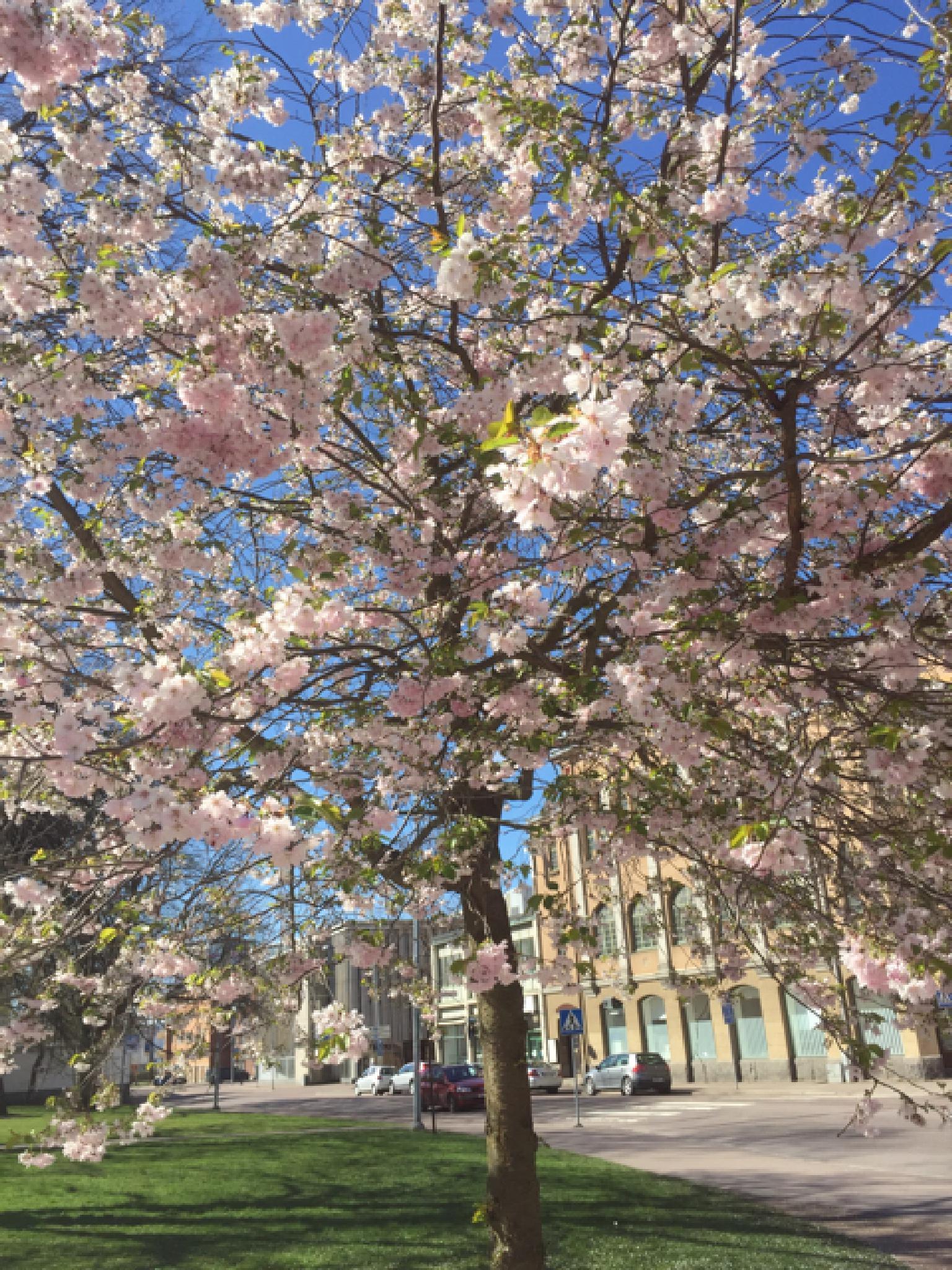 IMG_5172 by helene.renck.blom
