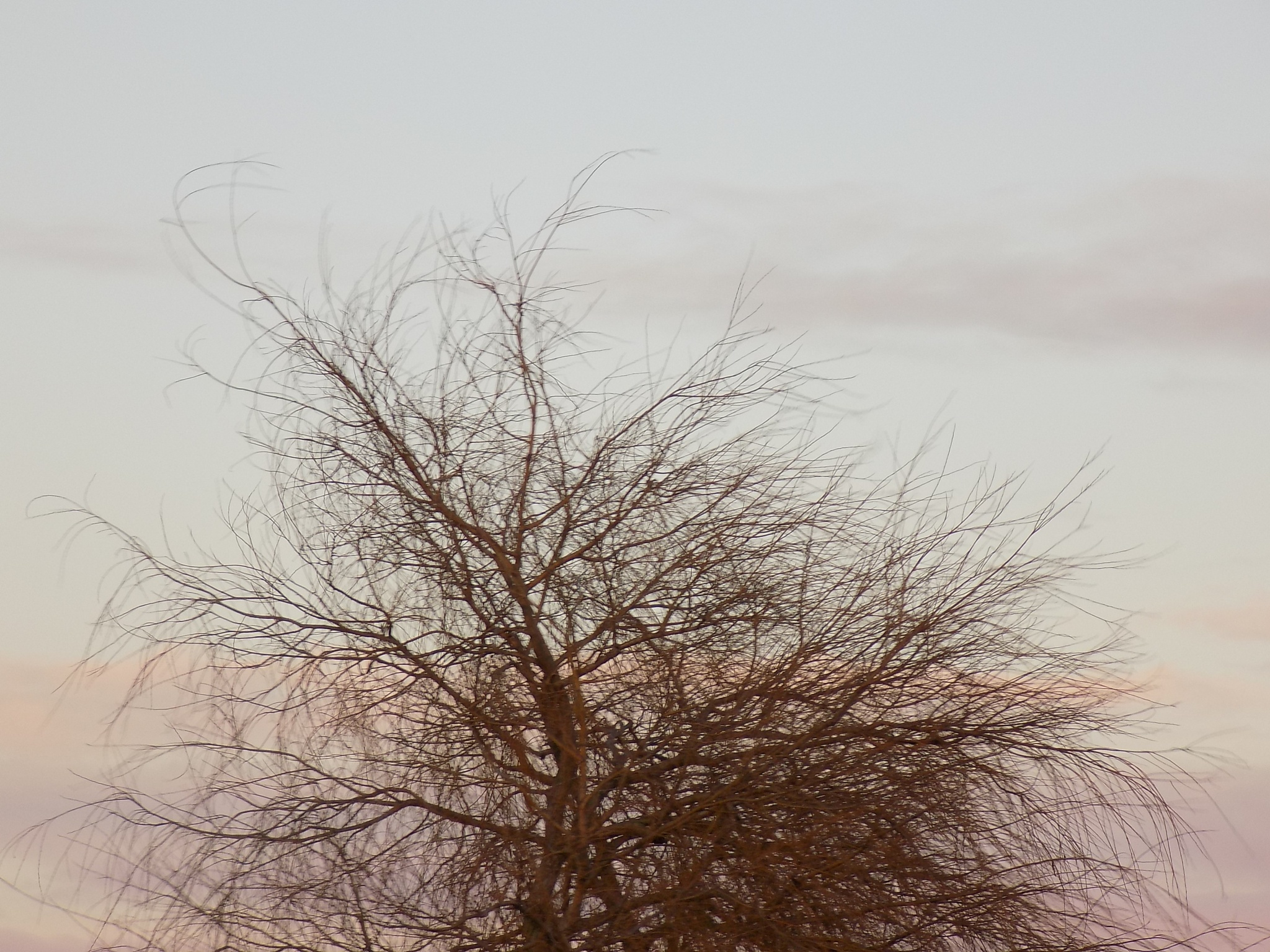Winter Tree by sweetybabe72
