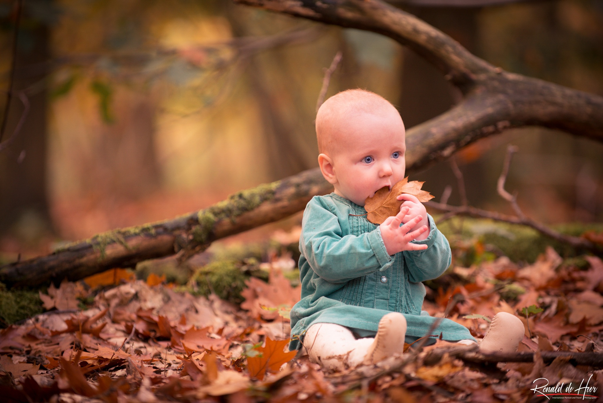Eating Leaves by DEHEER PHOTOGRAPHY