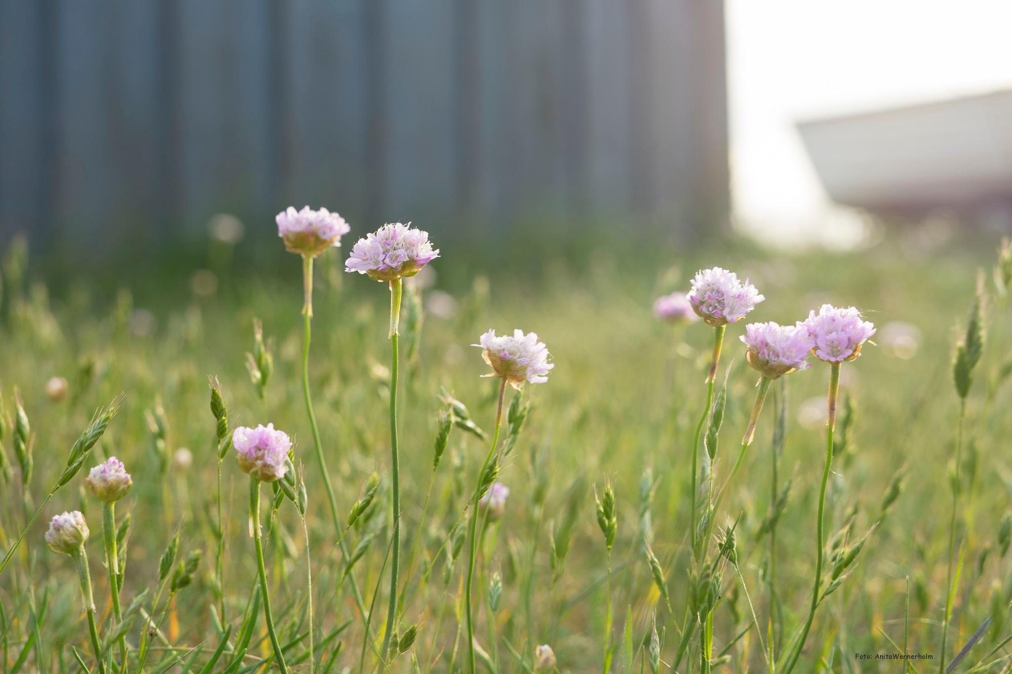 Summerflowers by AvieW