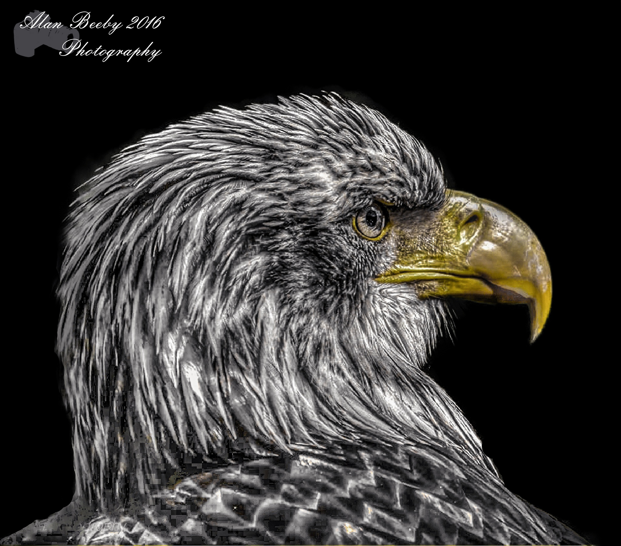 sea Eagle/zee arend by Alan beeby