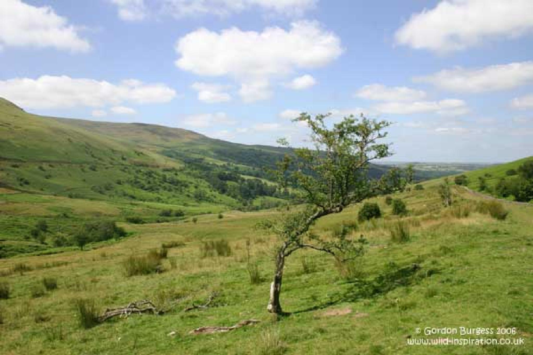 brecons by julie.burgess.167