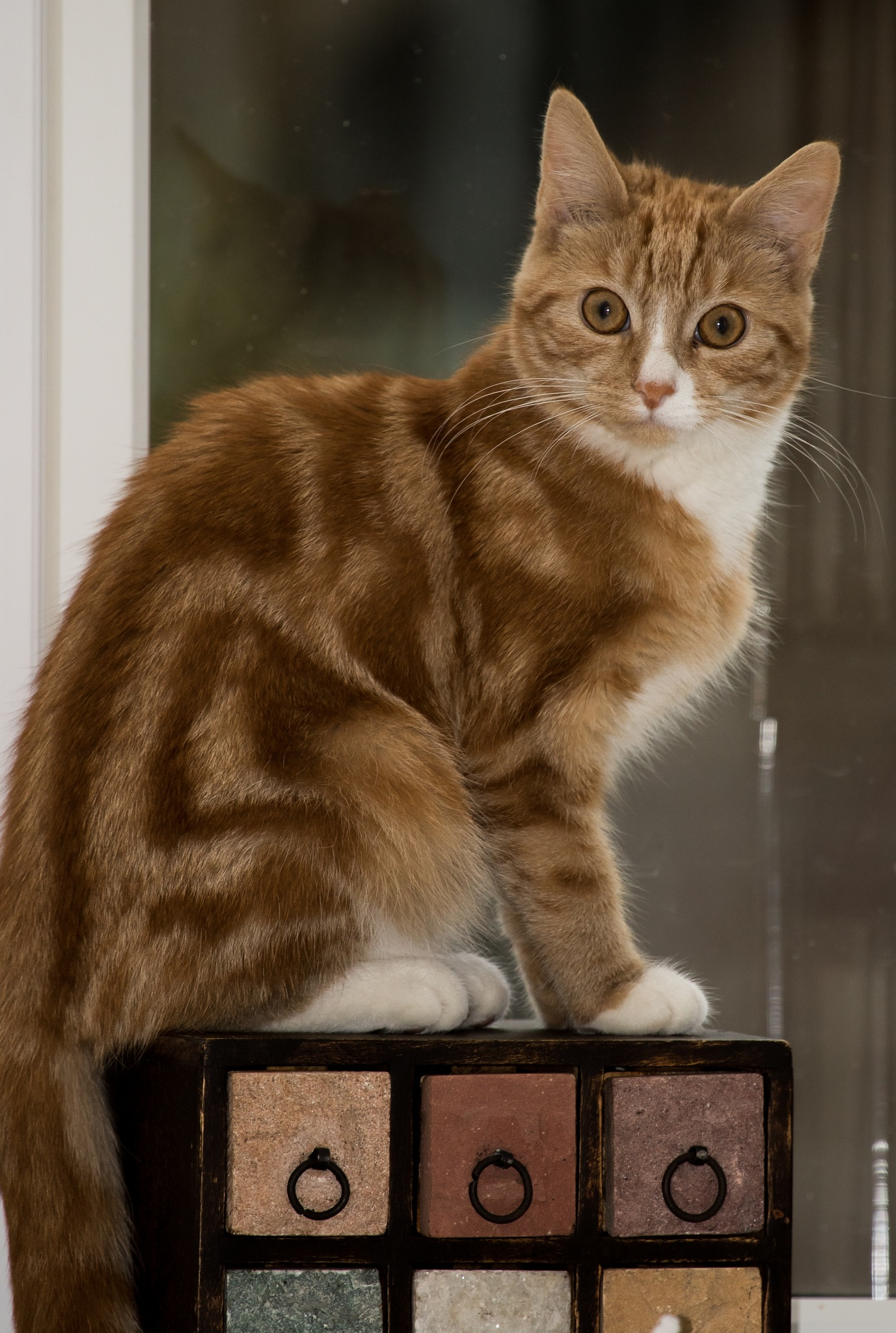 Millie Kitten by Maxine Grundy