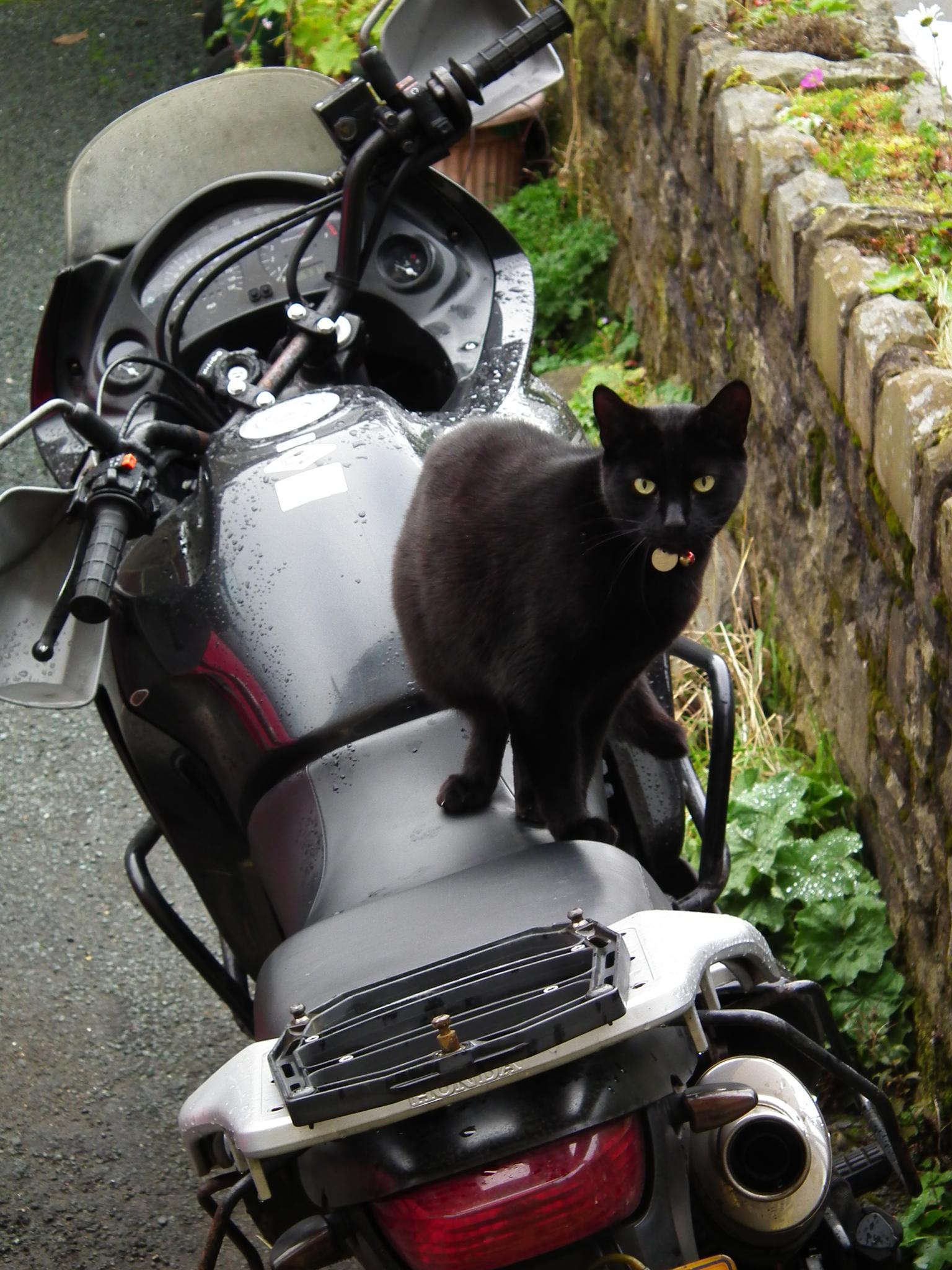 Honda Transalp Pussy Cat by andy.morrow.315