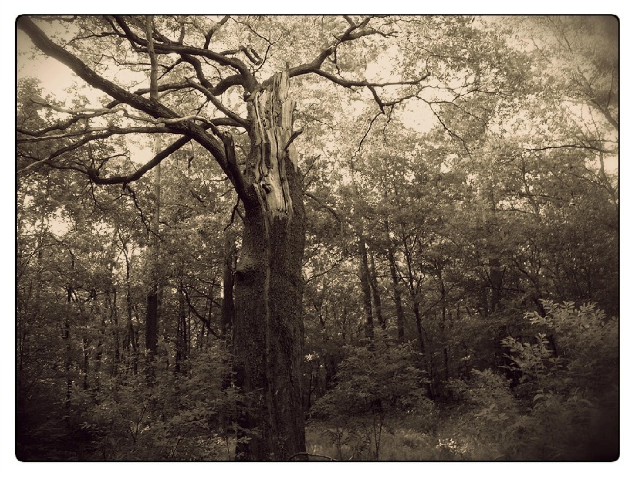the broken tree by FabioKeiner