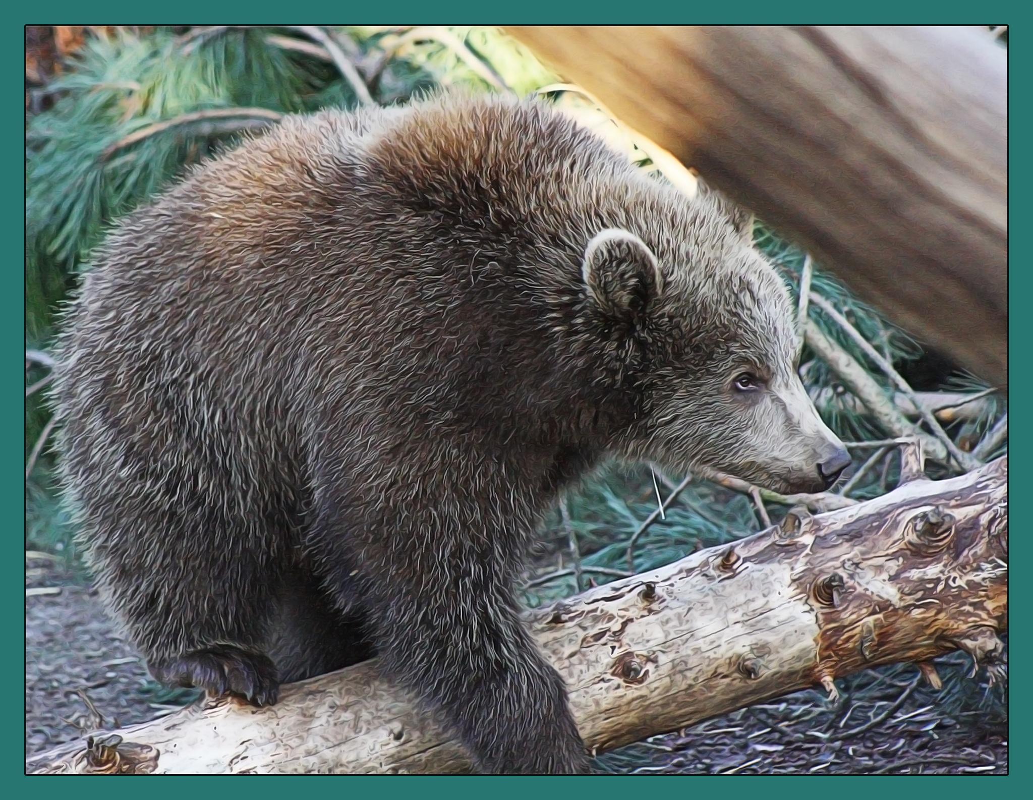 Bear by Henrik T. Sørensen