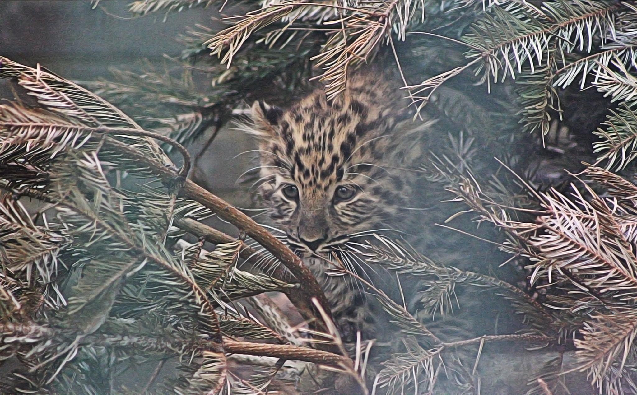 Little Leopard by Henrik T. Sørensen