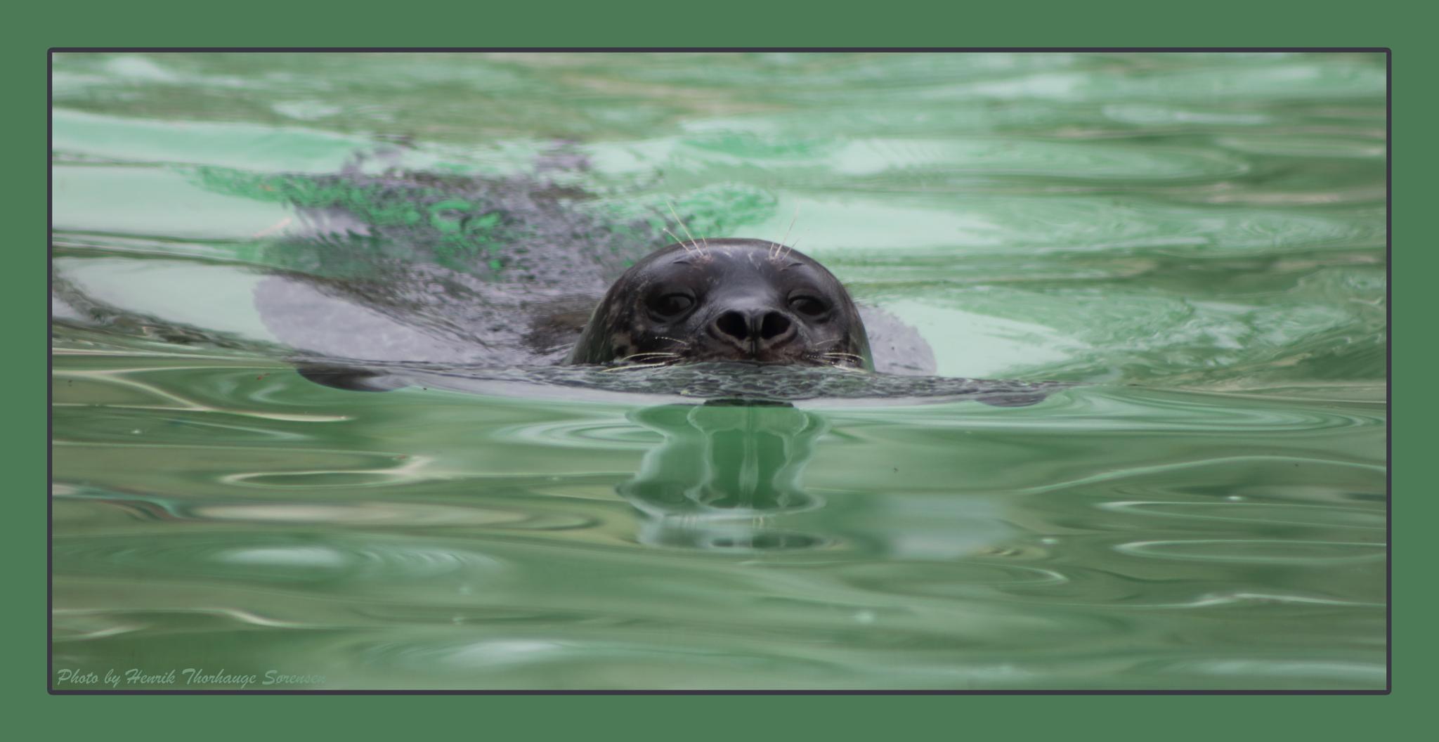 Seal by Henrik T. Sørensen