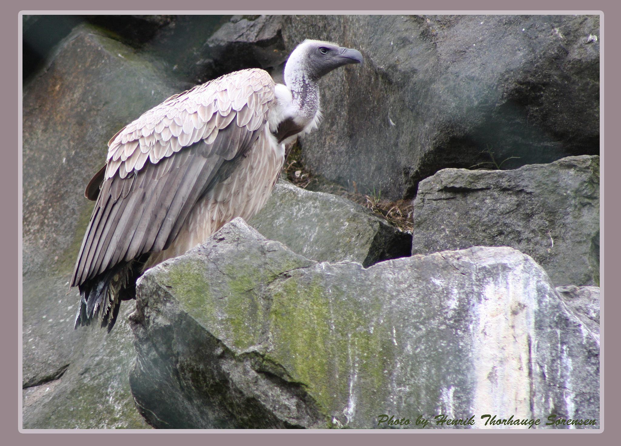 Bird by Henrik T. Sørensen
