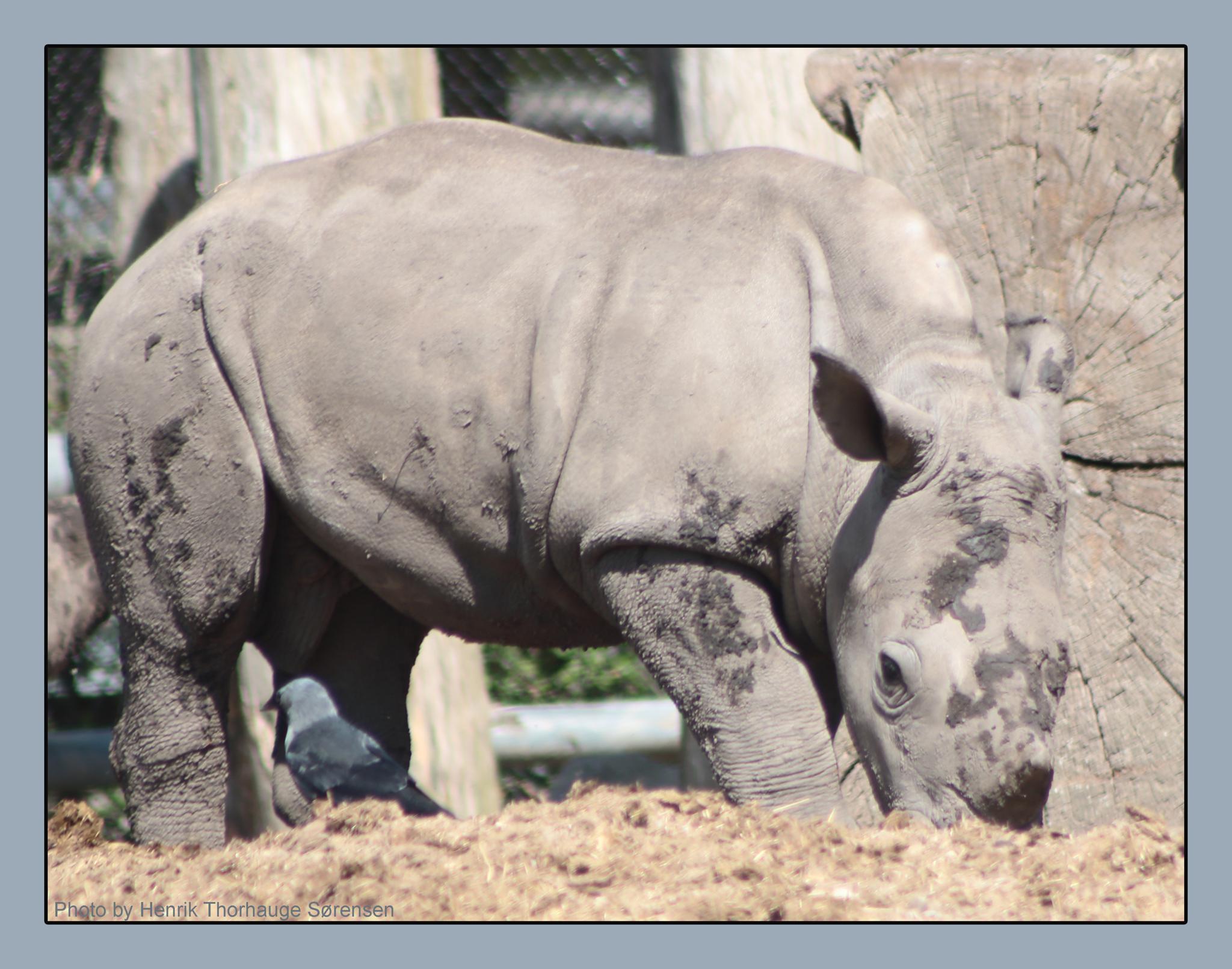 Photo in Animal #rhino