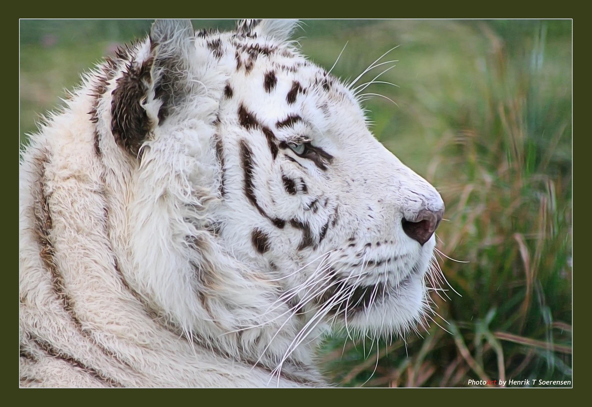 Tiger by Henrik T. Sørensen