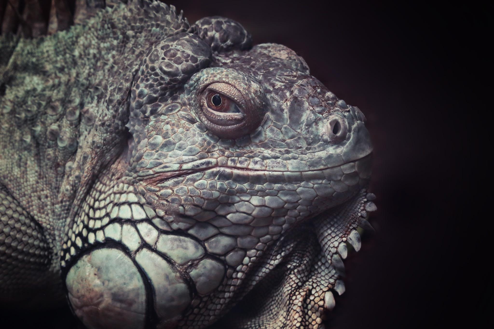 Reptile by Henrik T. Sørensen