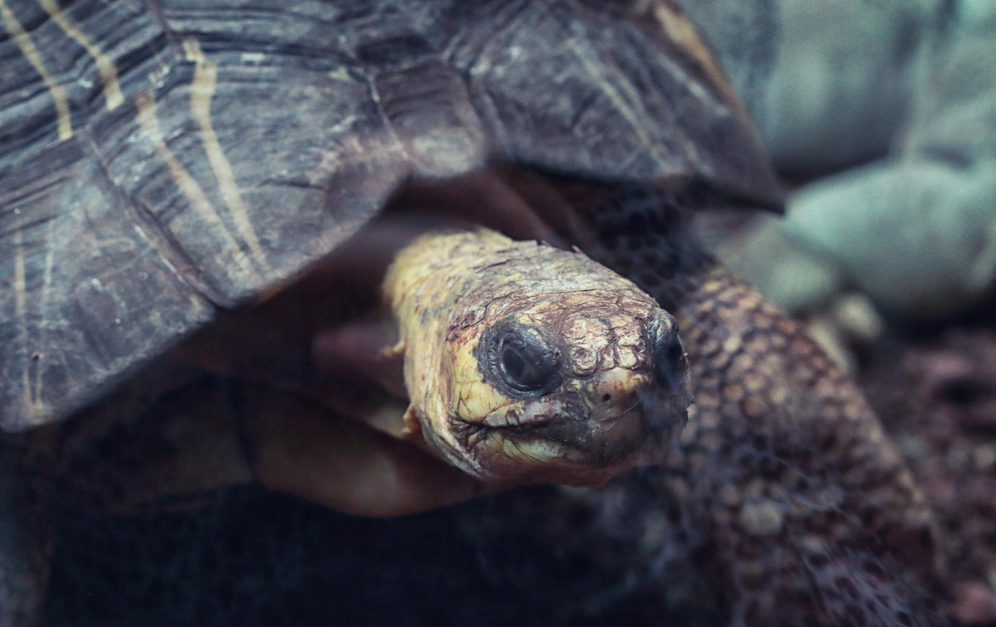 Turtle by Henrik T. Sørensen
