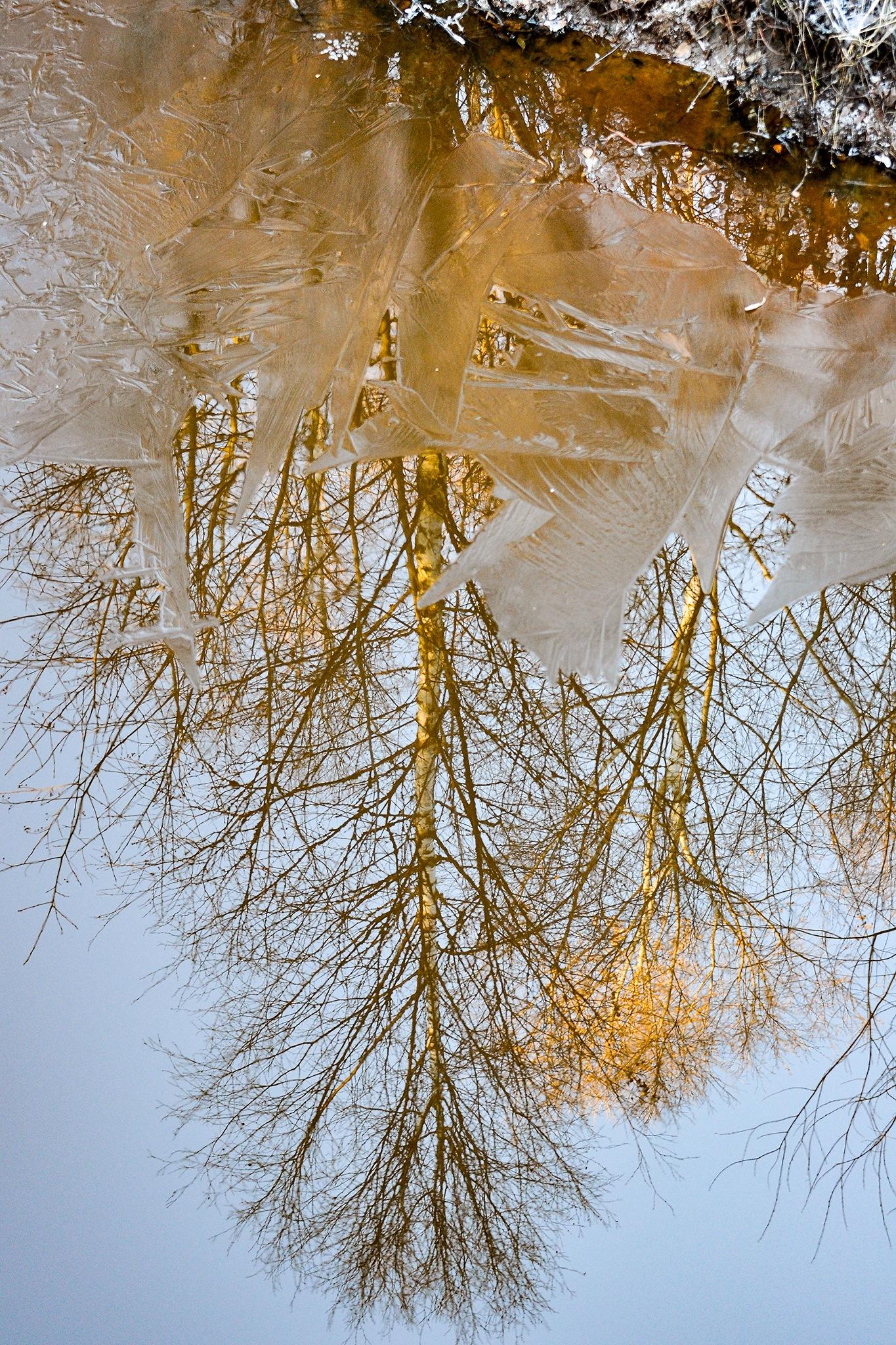 Reflection upside down by Kjell Lundqvist