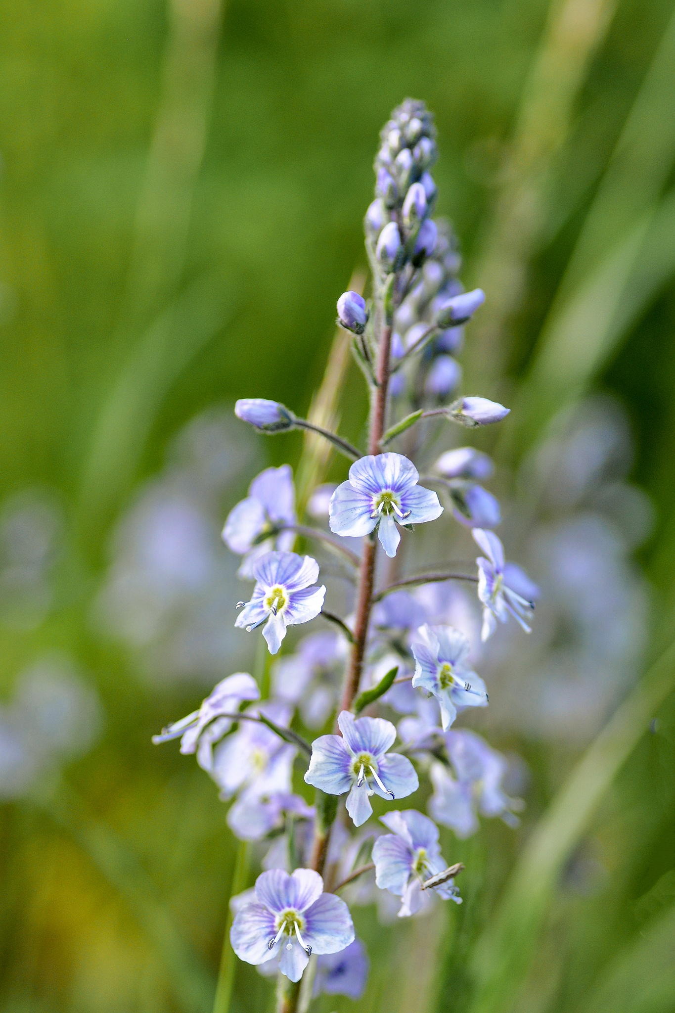 Photo in Nature #flower #flower bed #byske #skellefteå