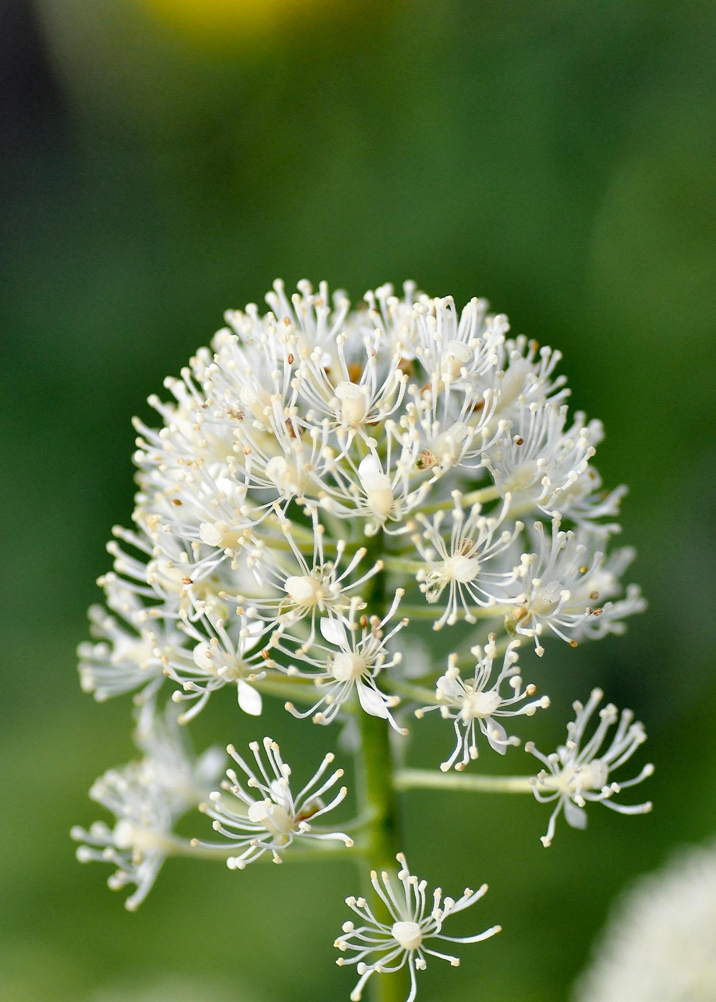 Photo in Nature #stamens #pistils #flower #byske #skellefteå