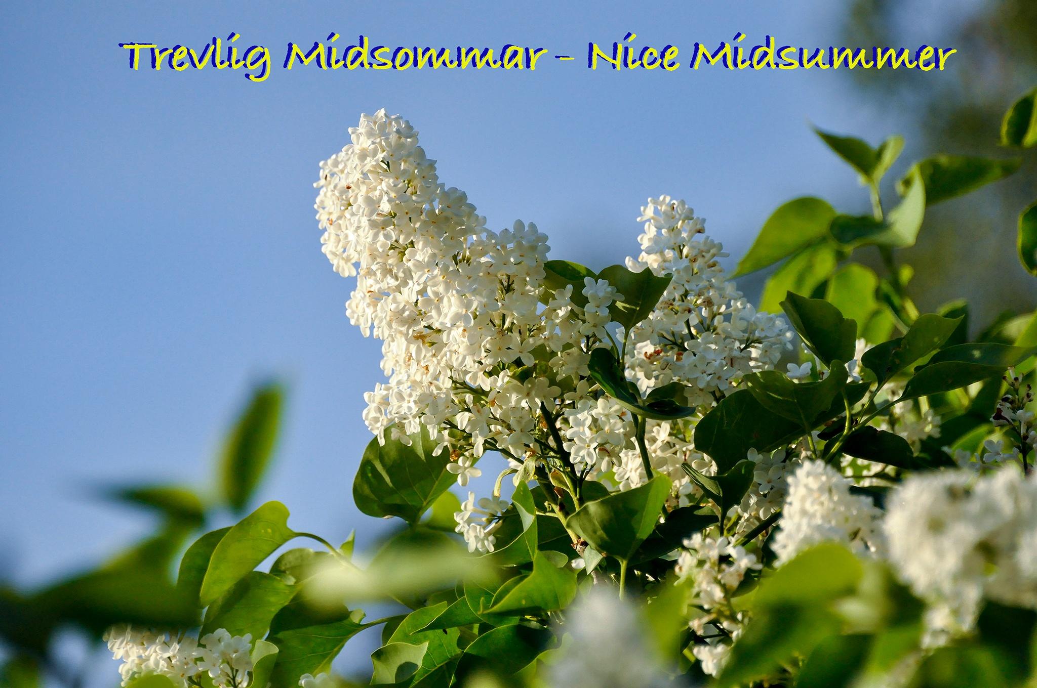 Midsummer's eve  by Kjell Lundqvist