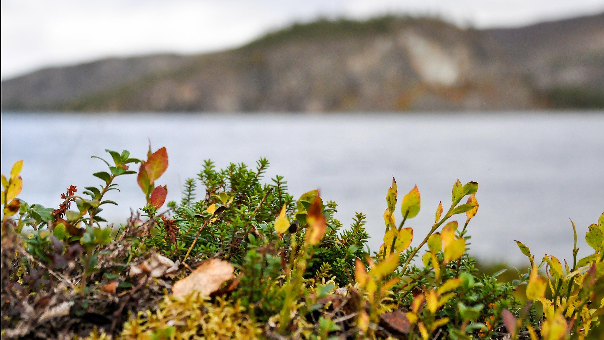 Autumn in Örnvik by Kjell Lundqvist