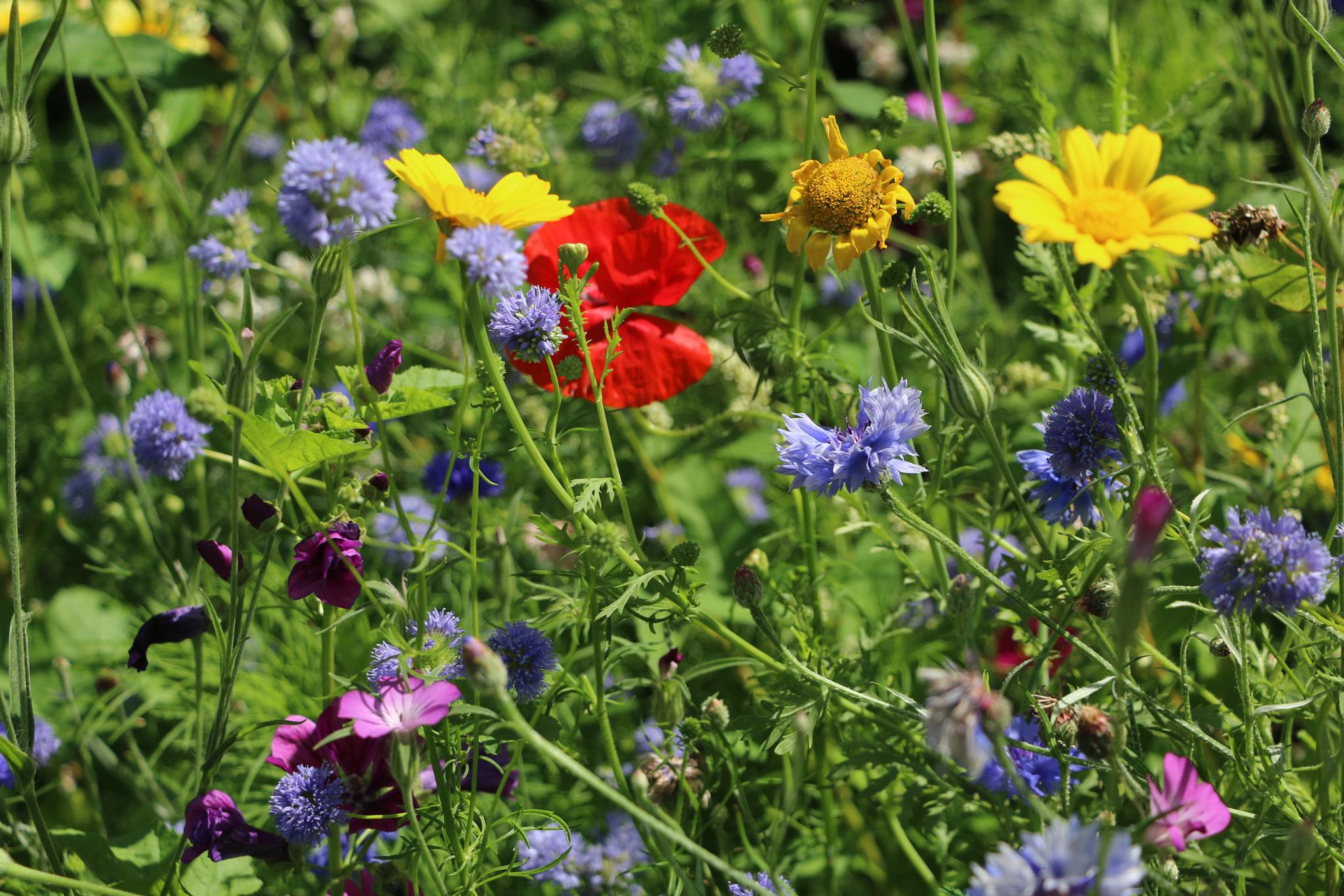 Photo in Nature #wildflowers #nature #colourfull
