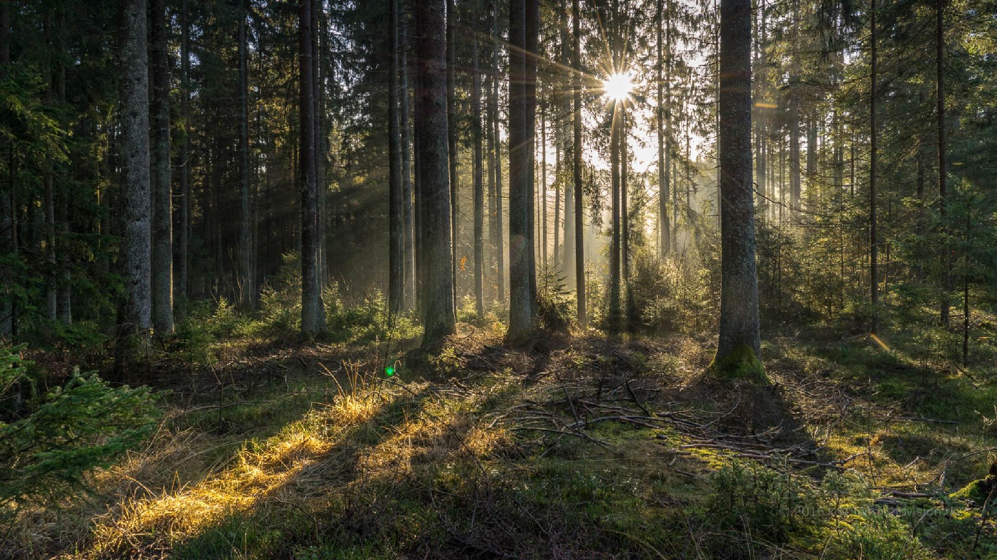 December Sun by Karsten Diestel
