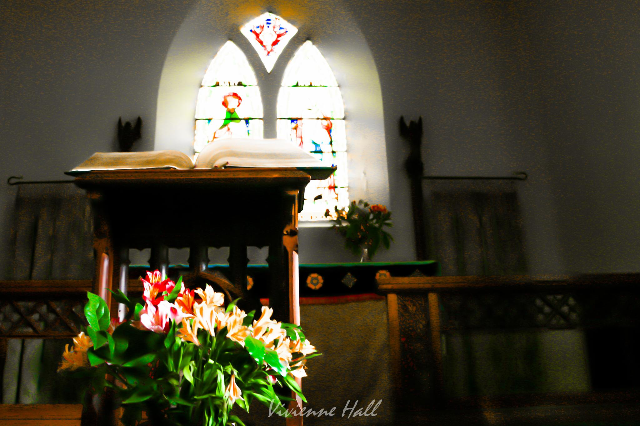 Soft Light by vivienne.hall.16