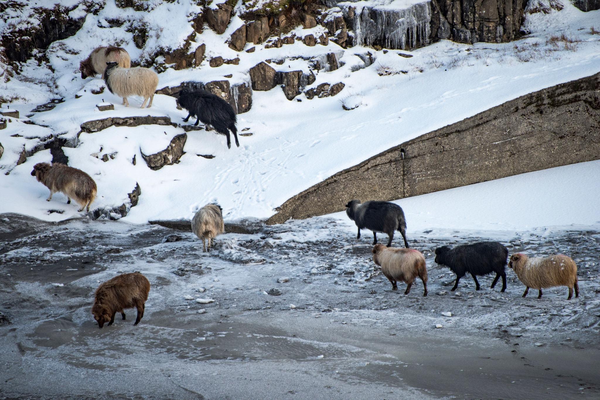 Finding food by harald bjørgvin