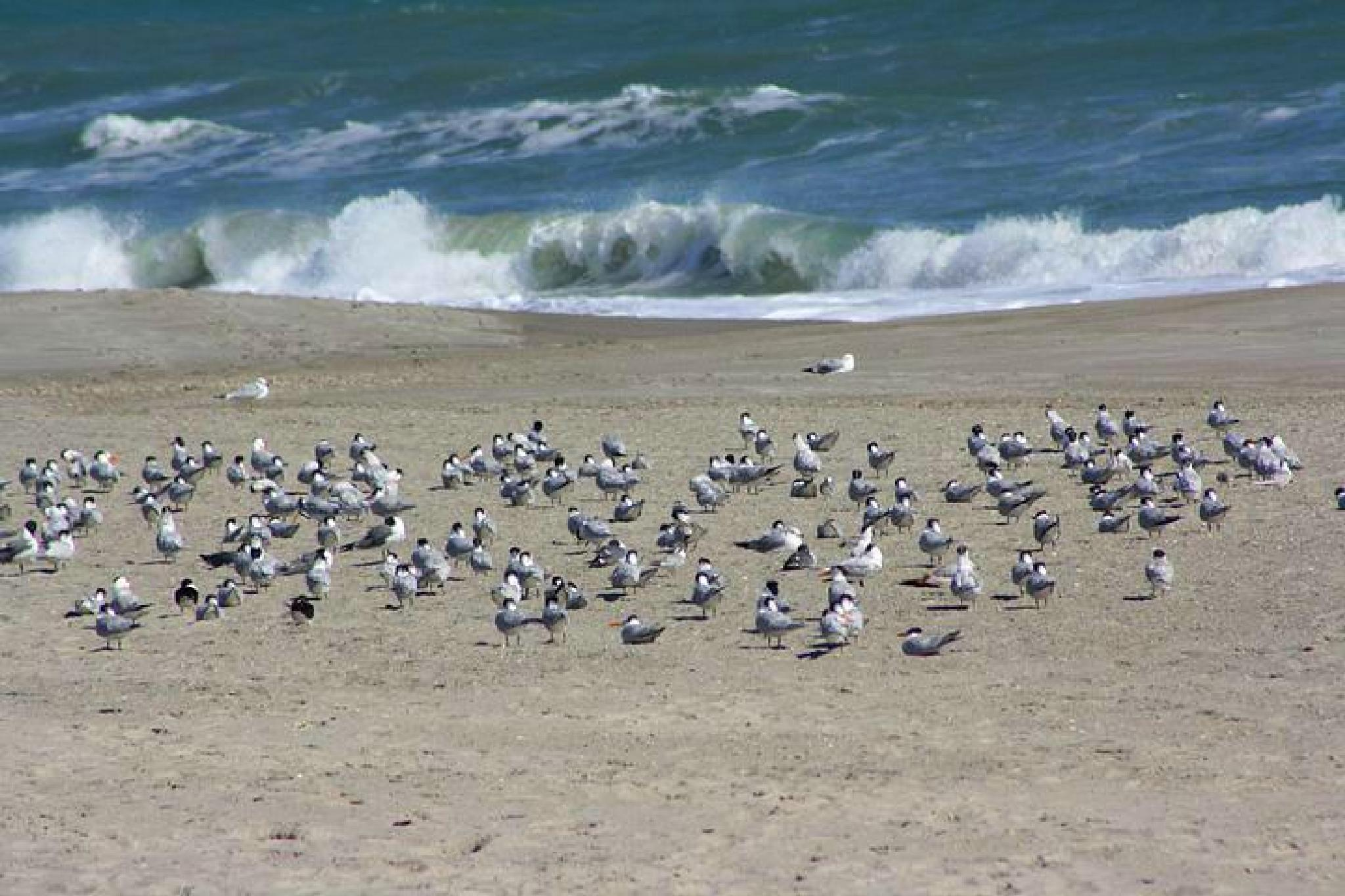 Seagulls take over by veronica.clarksanders