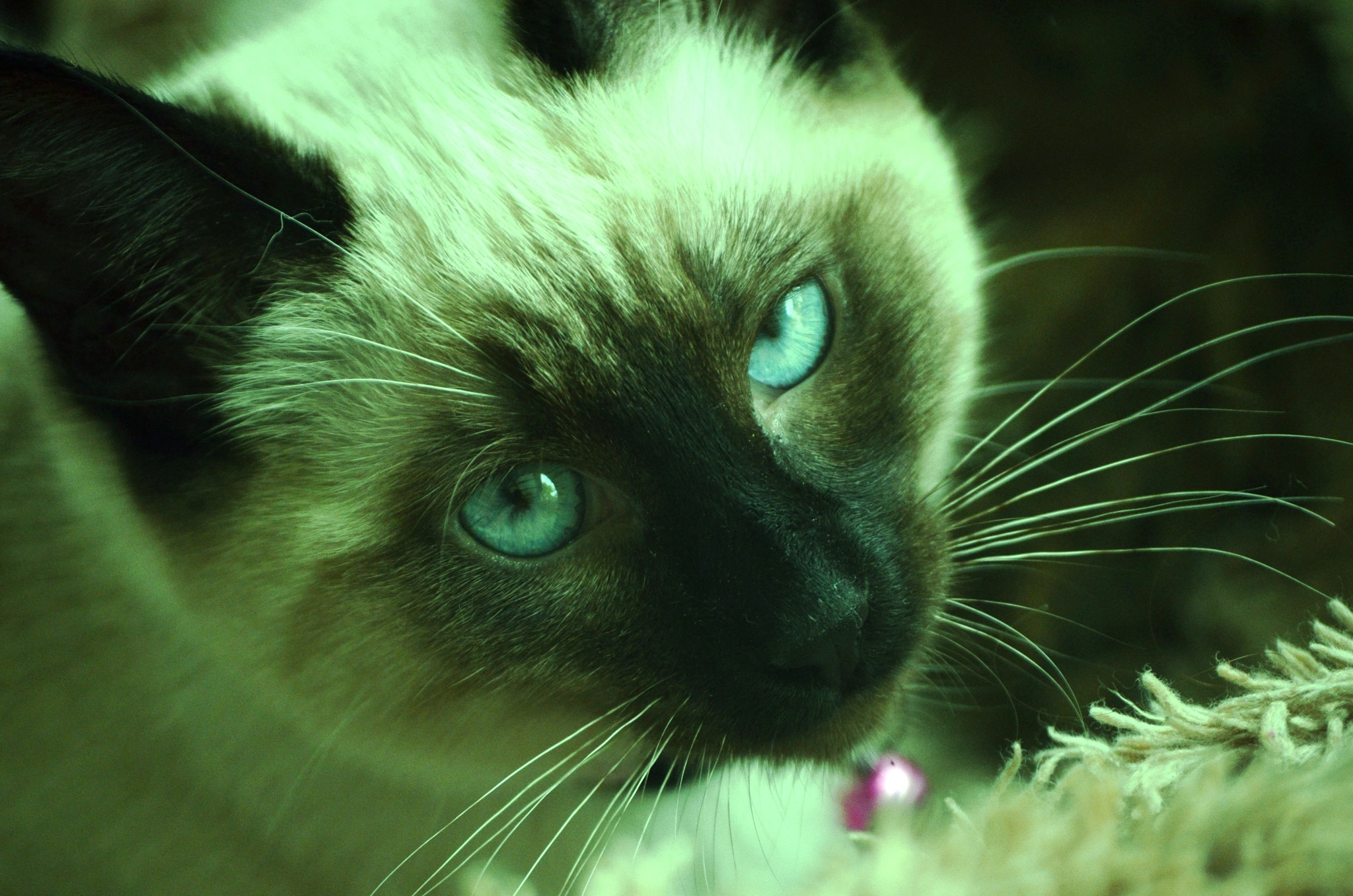 Cat Eyes by AdaMariePhotography