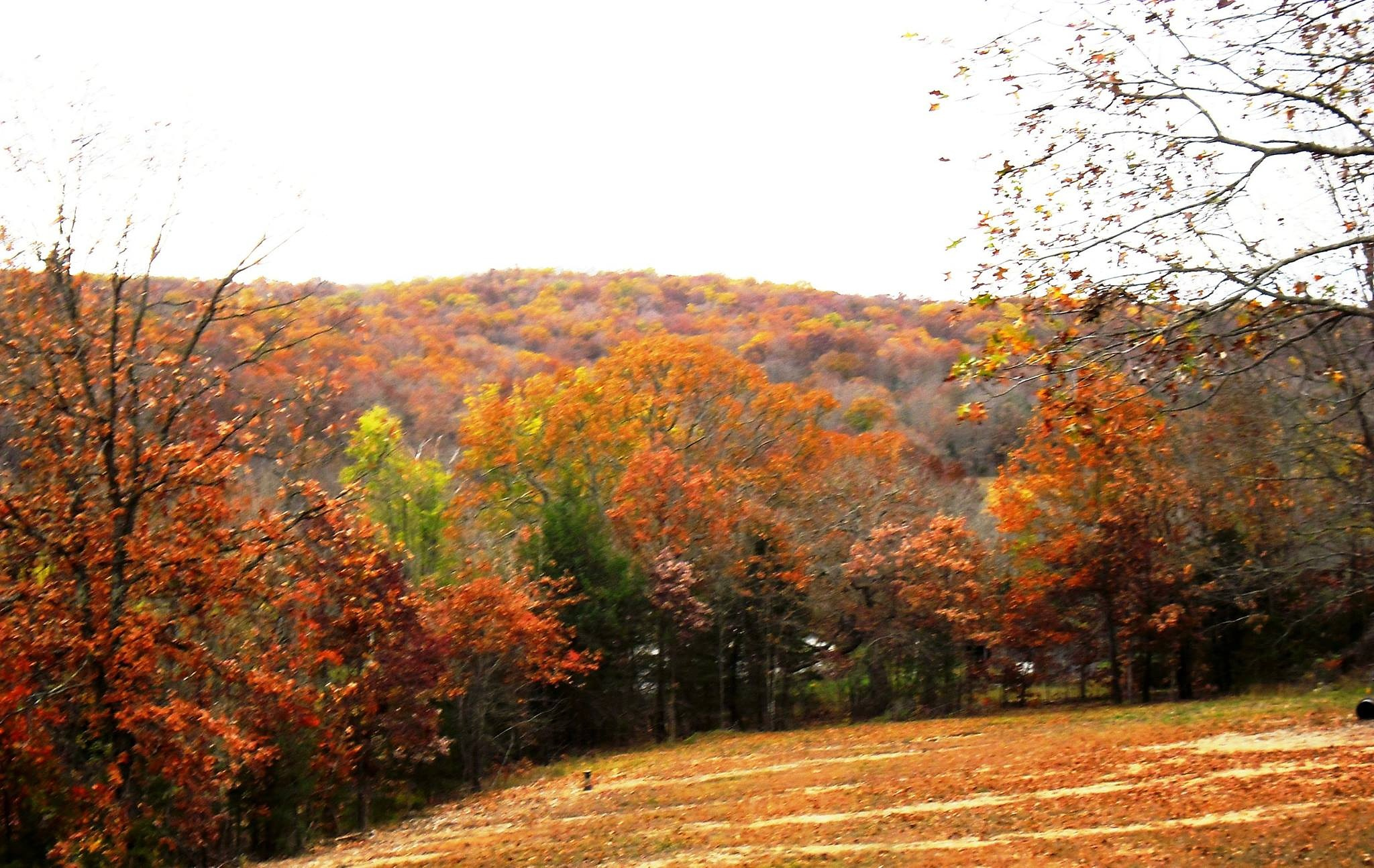 Buffalo Ridge by AdaMariePhotography