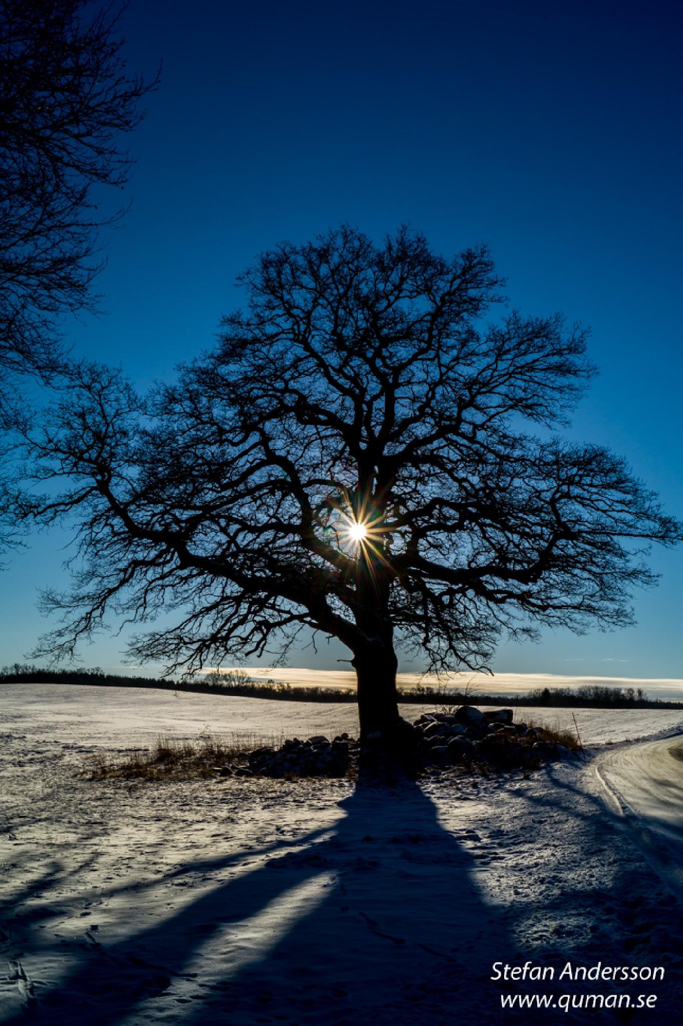 Winter Weather by Stefan Andersson