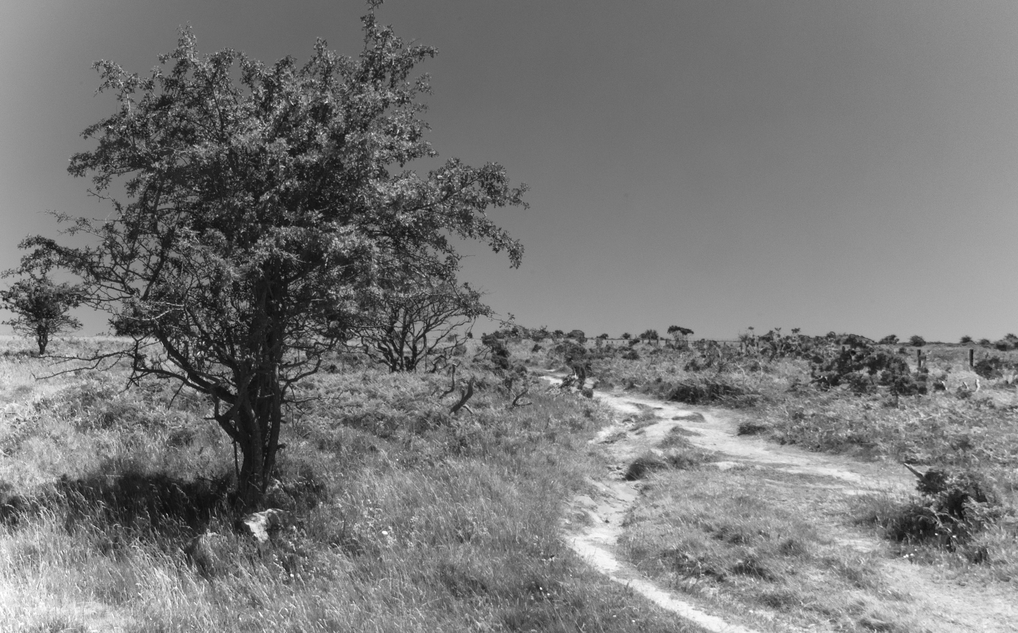 Photo in Black and White #pentax #summer #tree #lonely #quiet #peace #peaceful #day #cheddar #sun #sunshine #b&w #landscape #abandoned