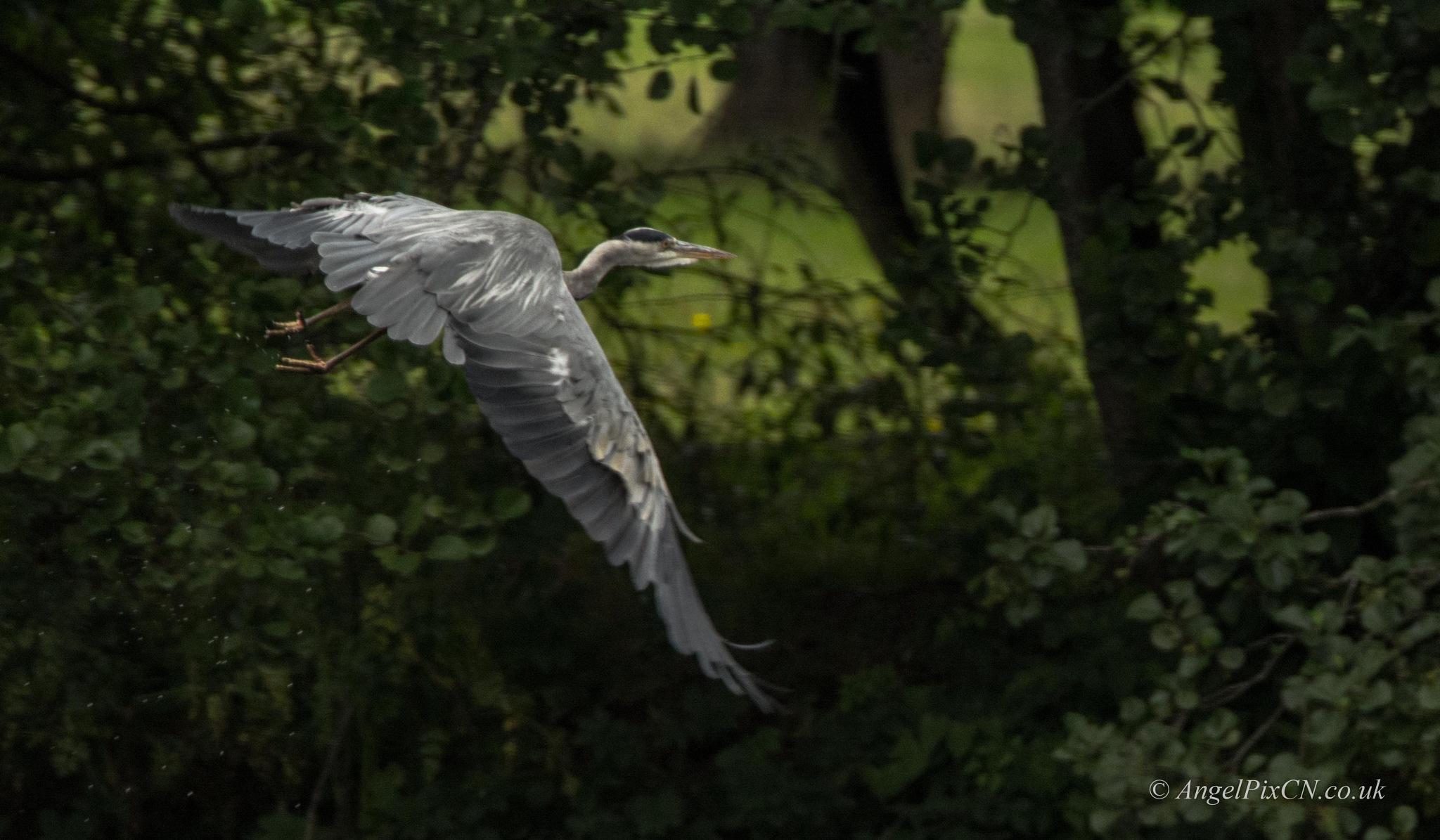 Caught in flight by AngelPixCN