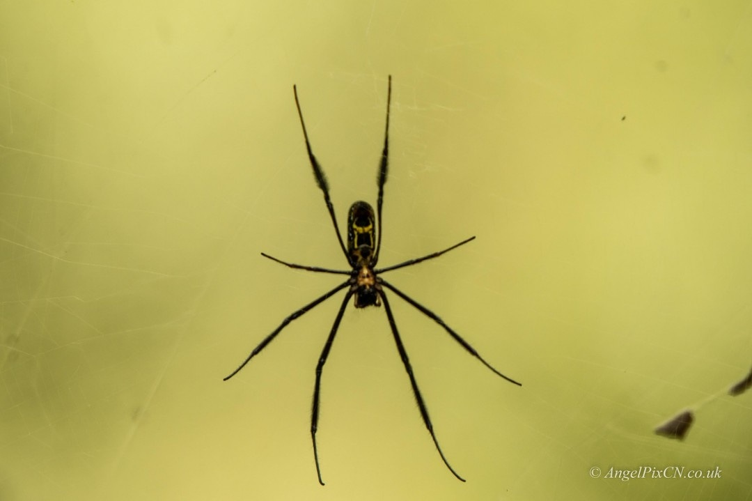 Insy winsy spider  by AngelPixCN