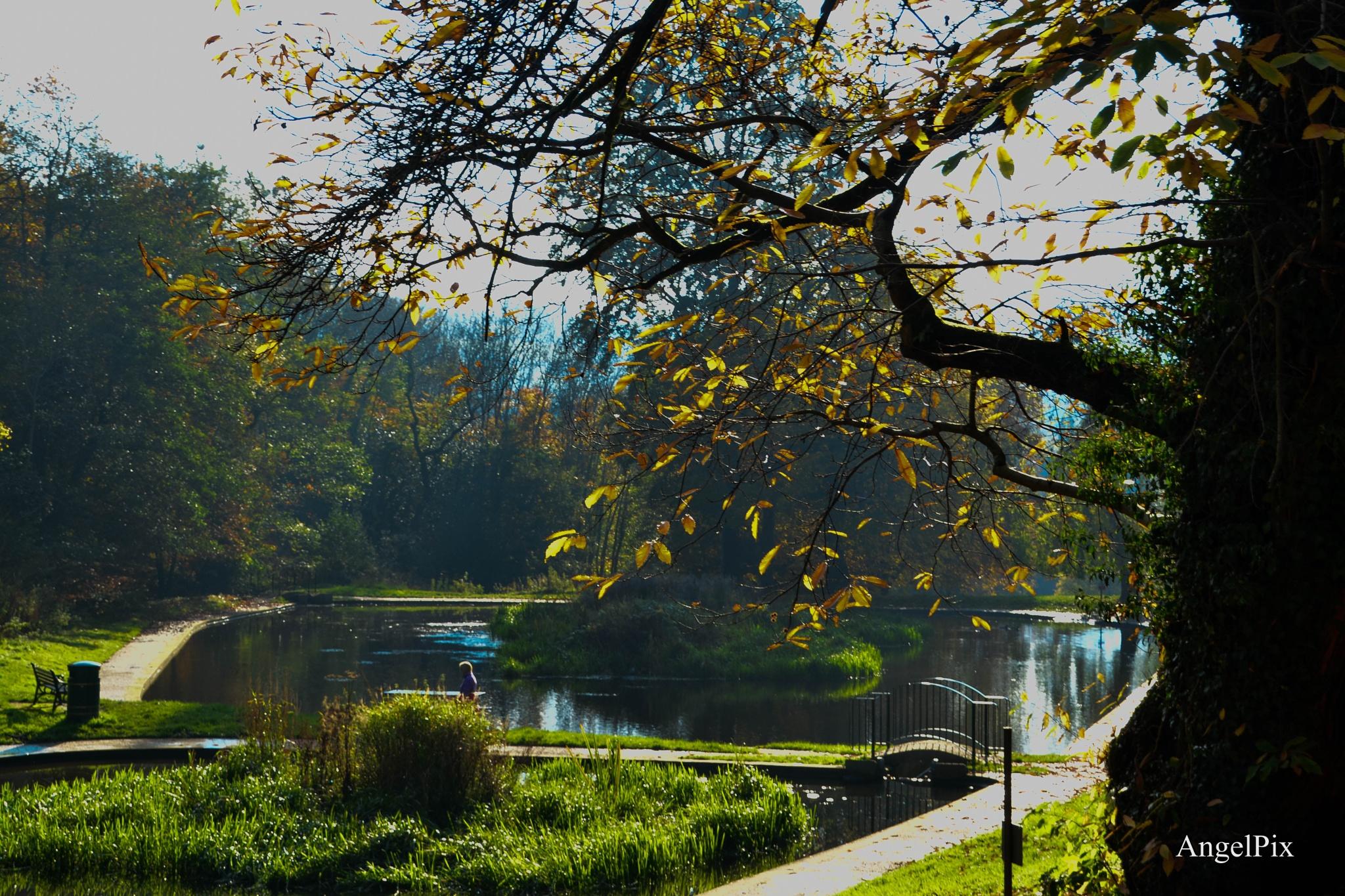 Walk in parks  by AngelPixCN