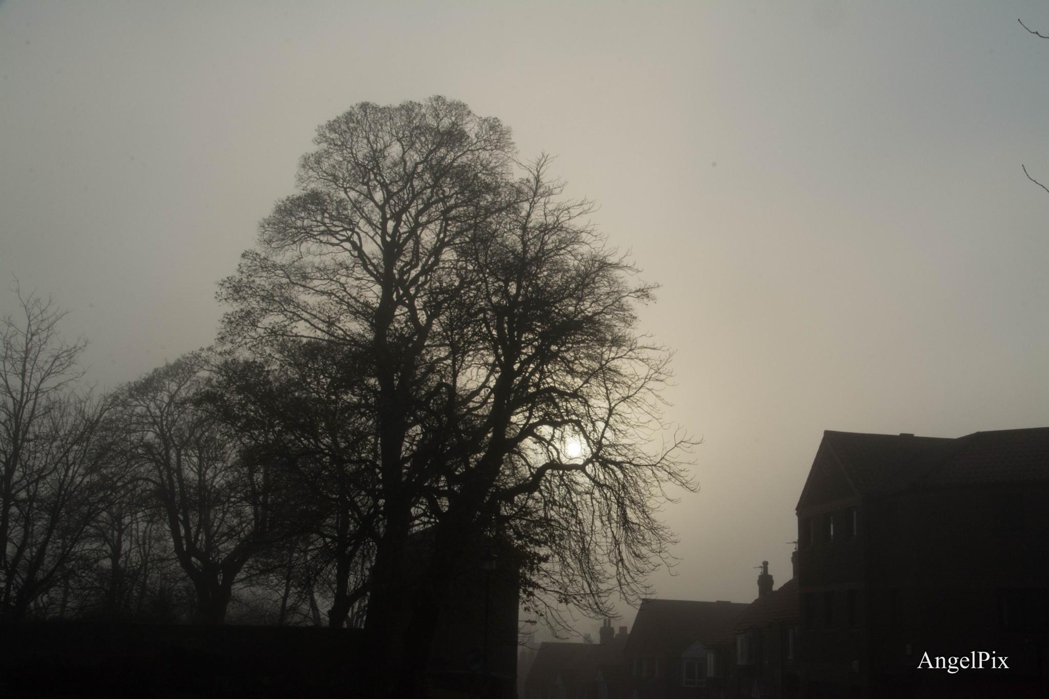 Winter Days  by AngelPixCN