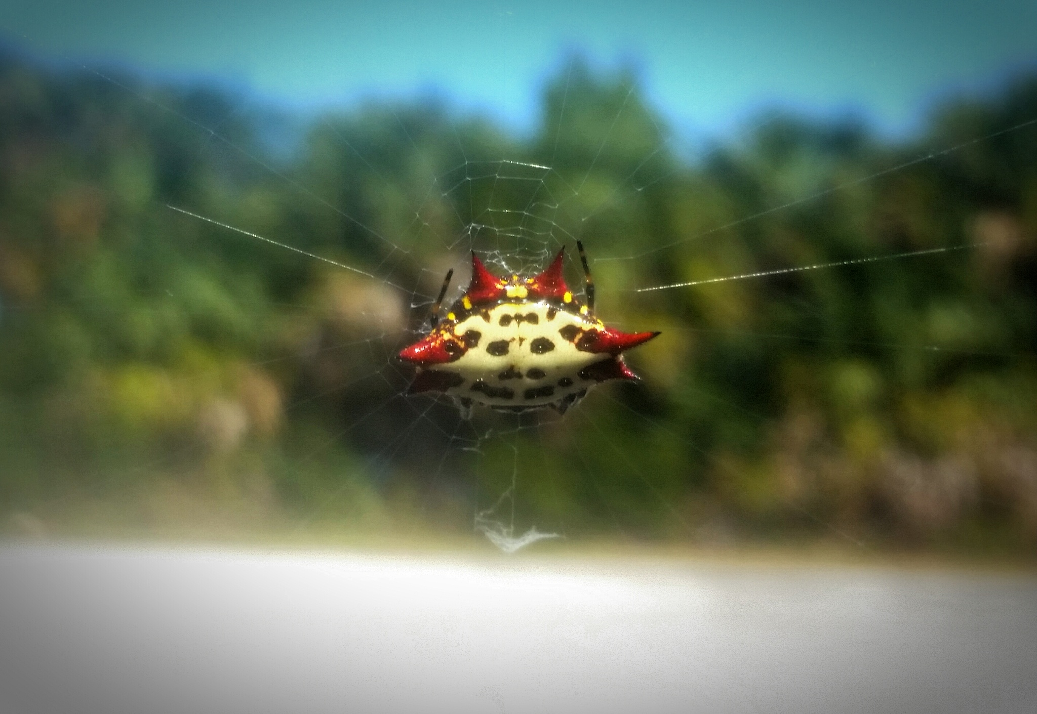 Spider Orb Weaver by brian.carter.5661