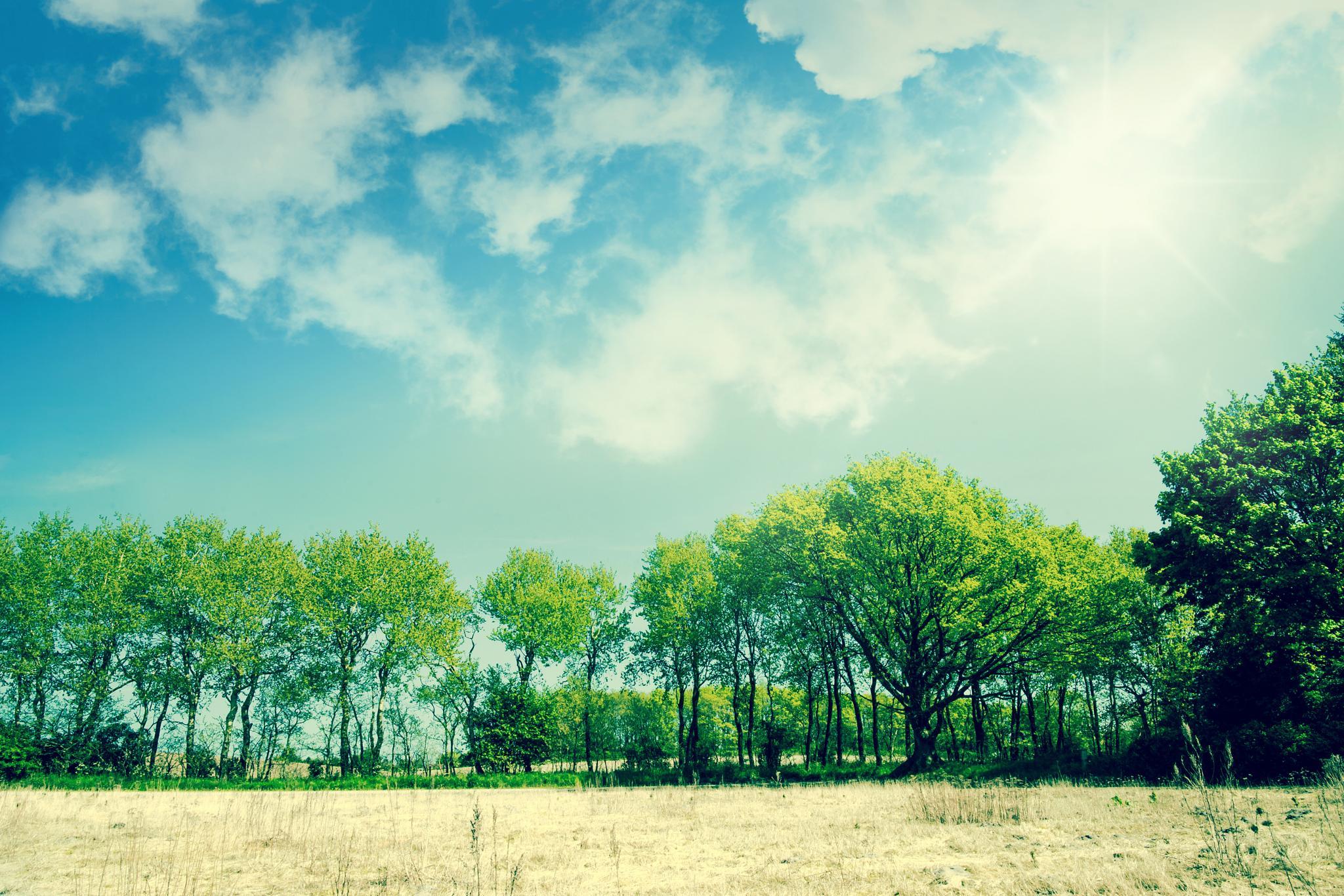 Green trees by Kasper Nymann
