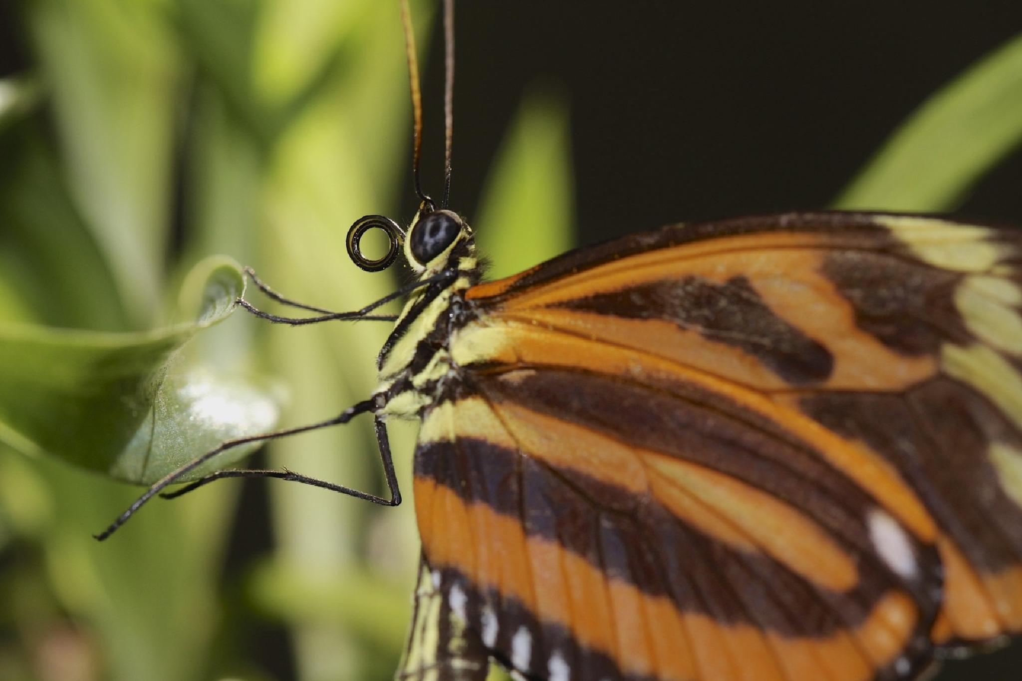 Butterfly by Steen Jensen / www.sjfoto.dk