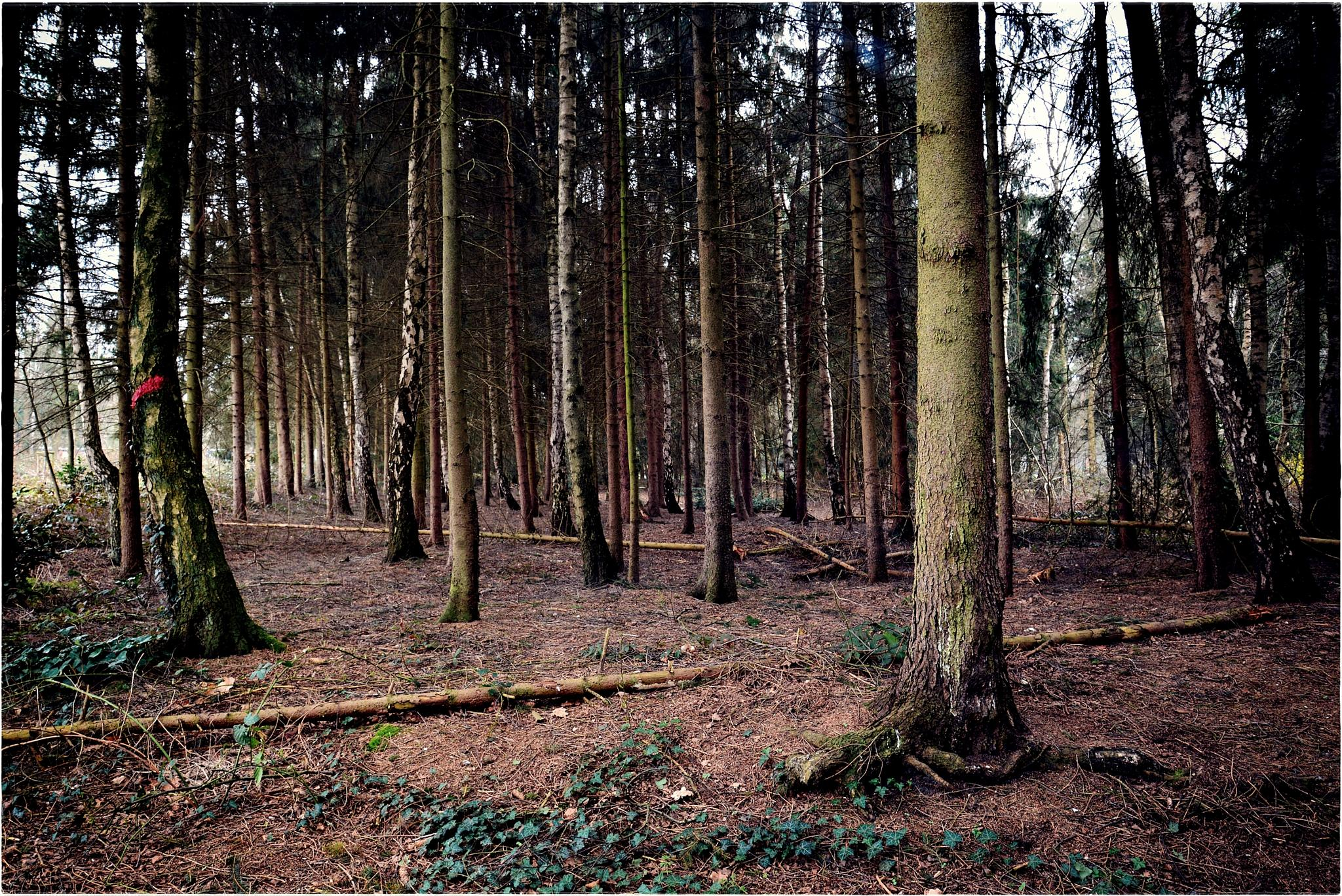 Dark Forest in springtime by shadow