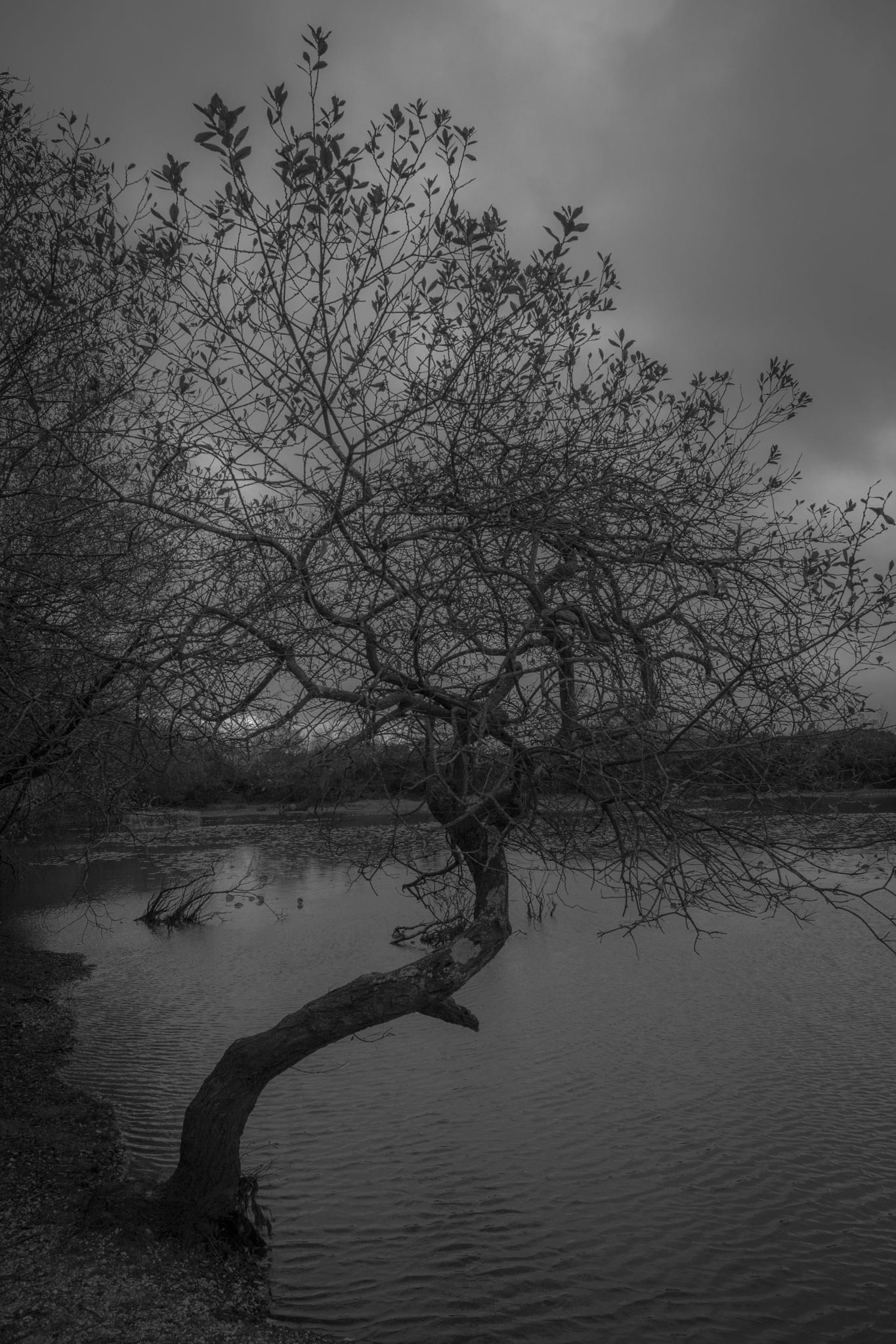 Gloomy lake by Angela Grant