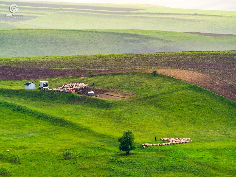 At the sheepfold by Gabi MARIAN