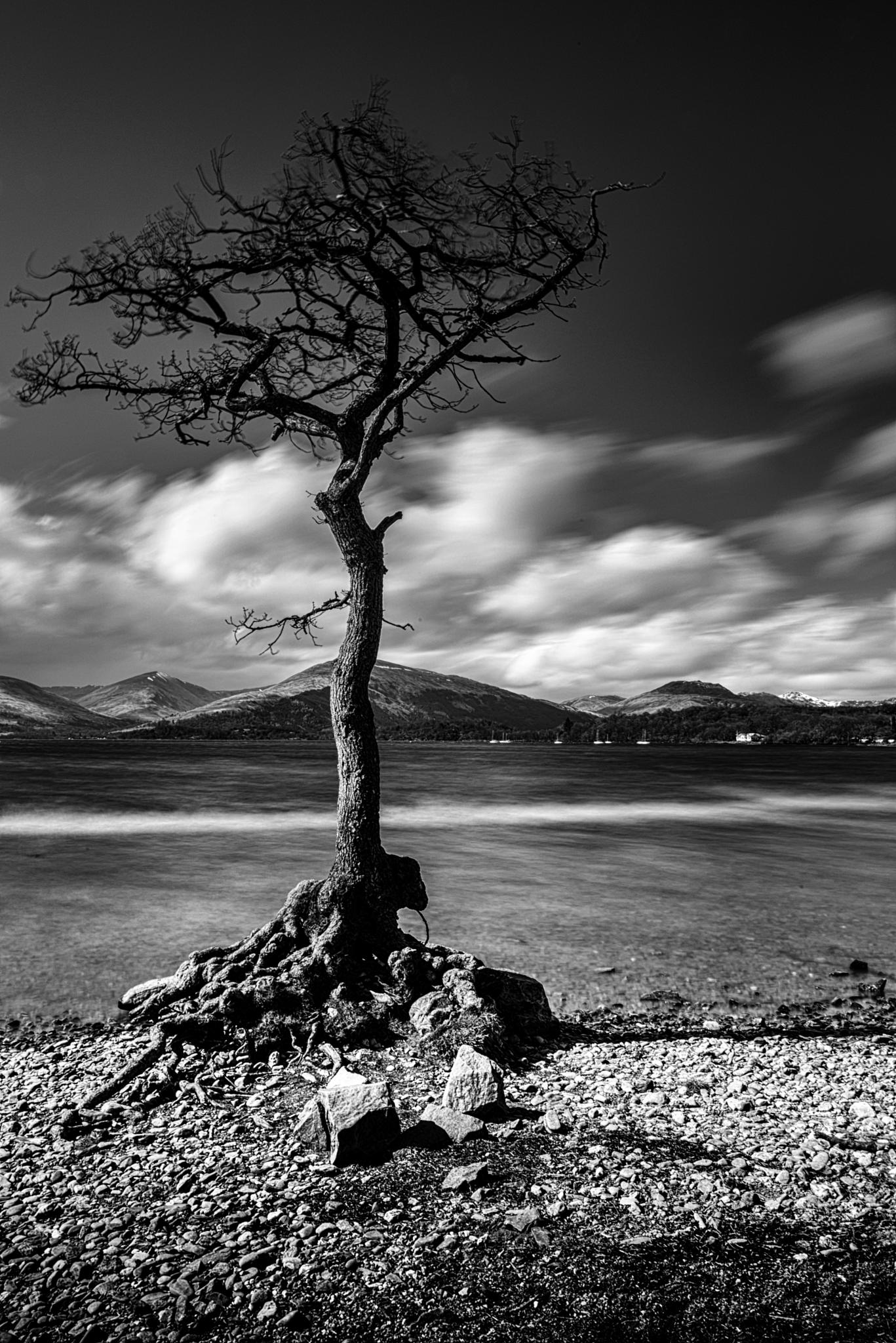 Milarrochy Tree by Joe Porter Photography