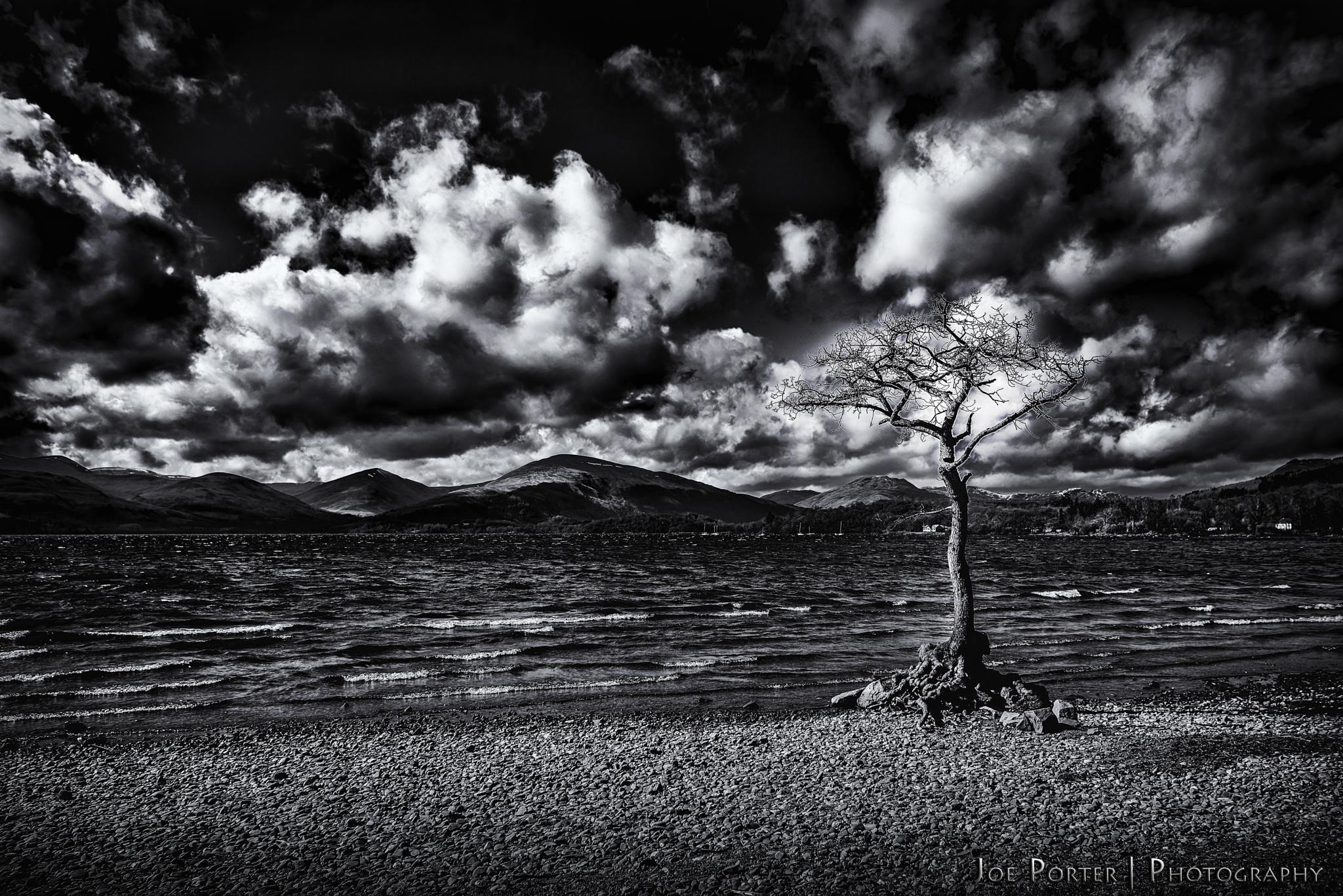 Milarrochy Tree and Sky by Joe Porter Photography