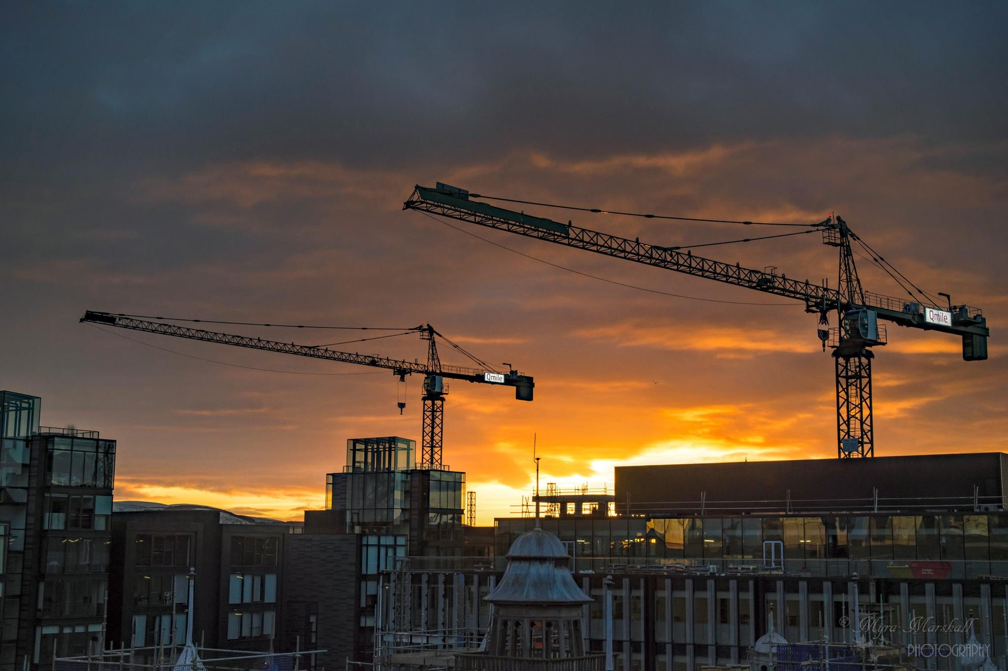 Cranes at sunset by myra.watson3