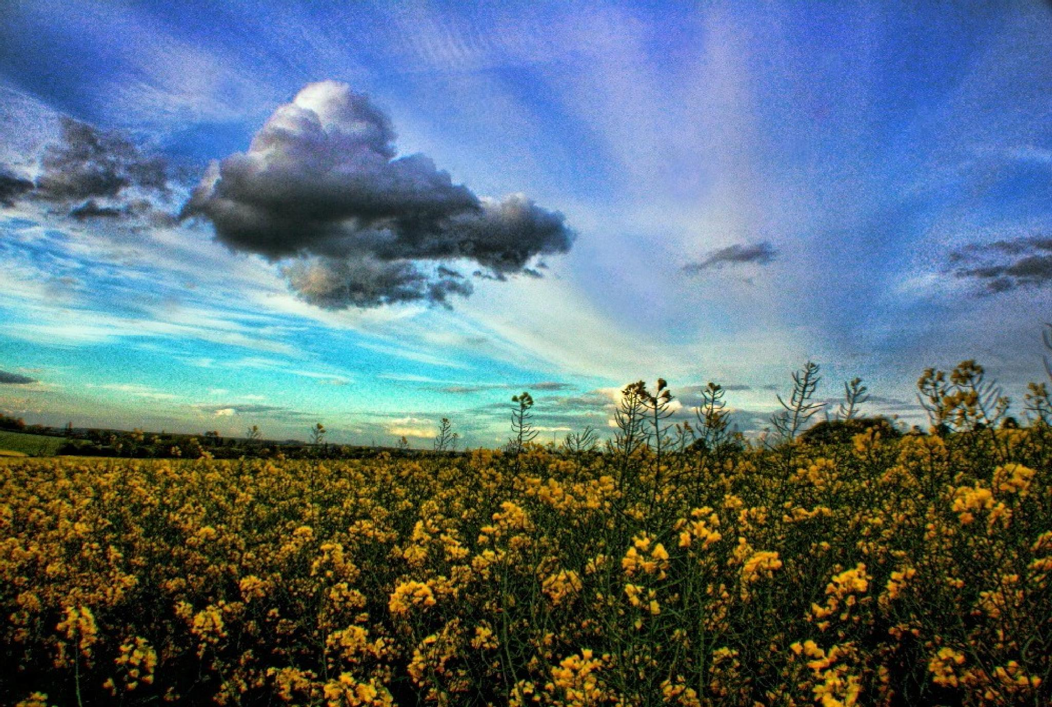 Yellow and blue by keve E