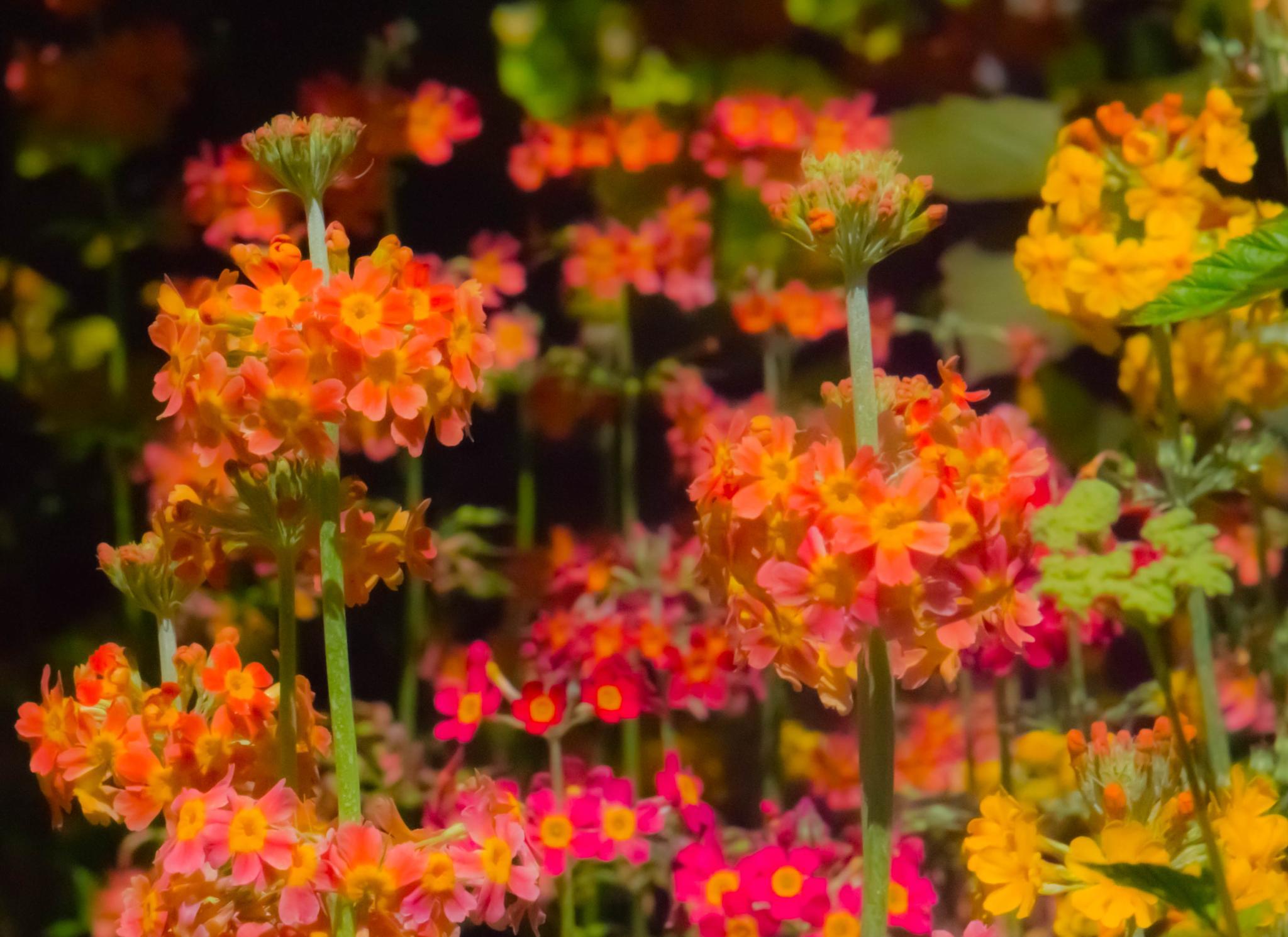 Summer colour by leigh.hudson.779