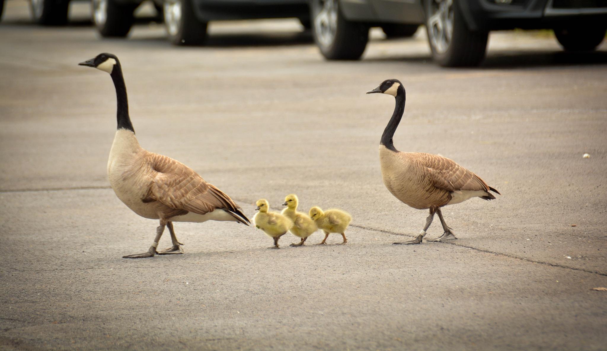 happy family by Joy Skiver