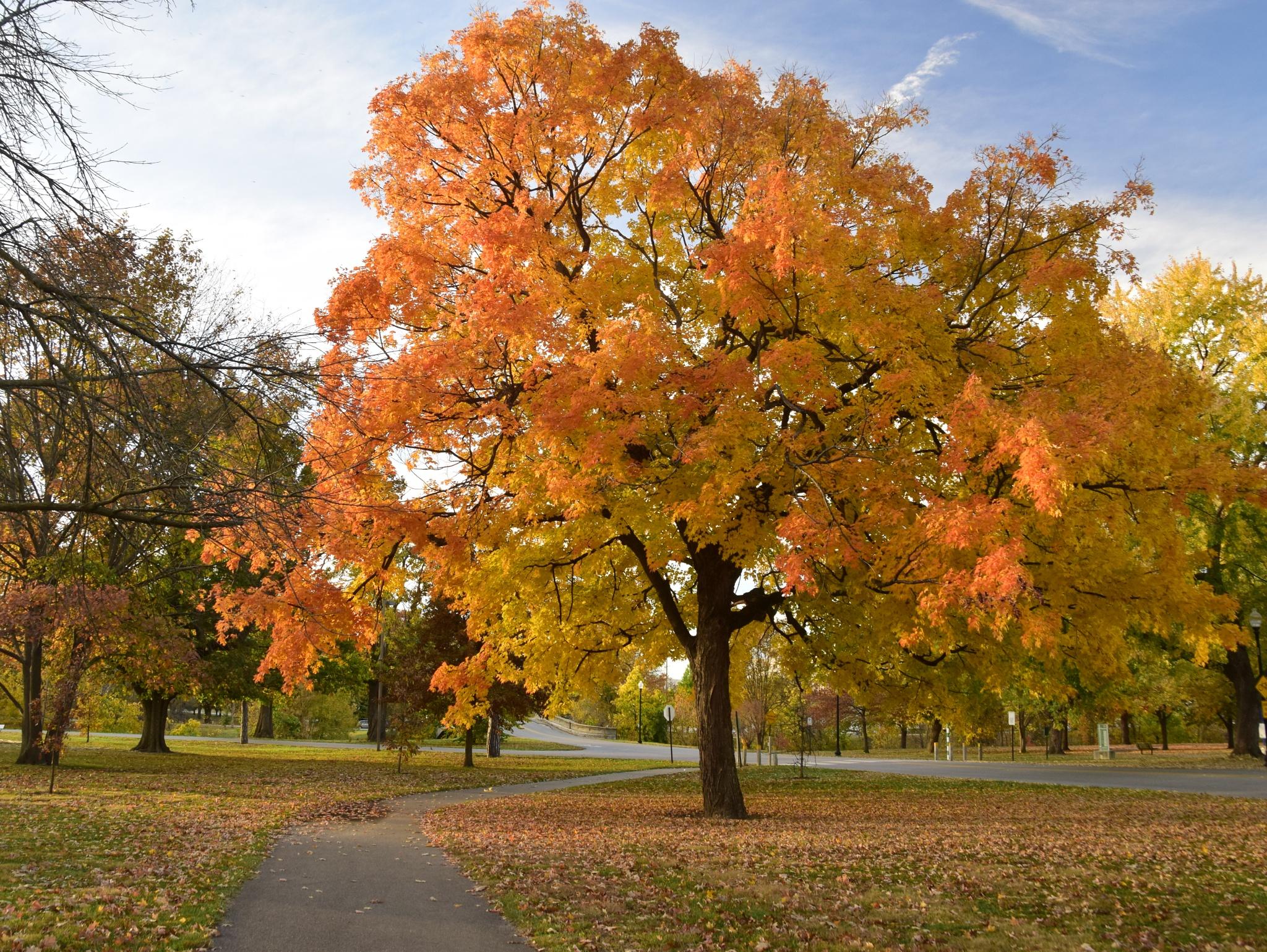 Autumn in Garfield Park by dan.tomkins