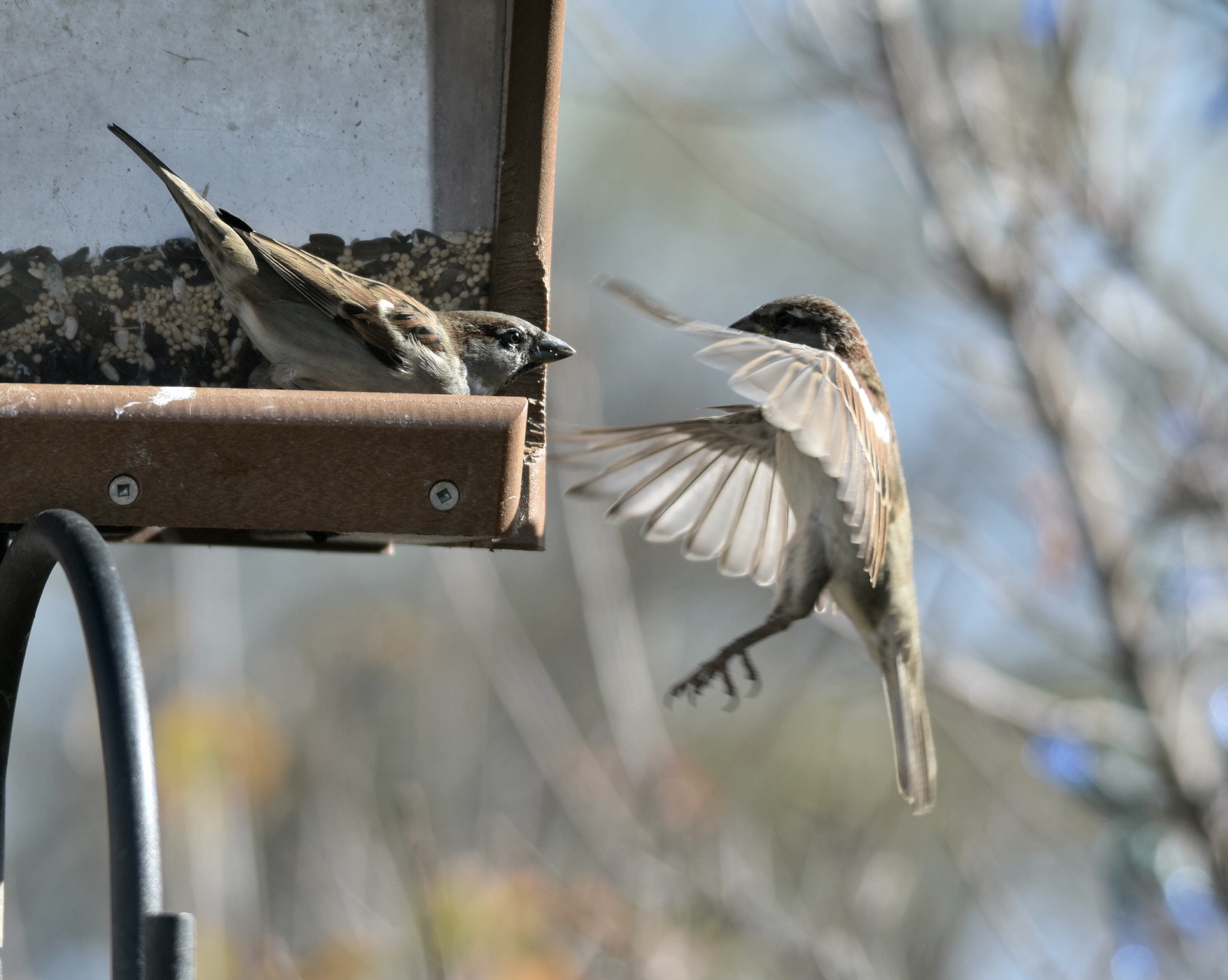 Two birds at a Feeder by dan.tomkins